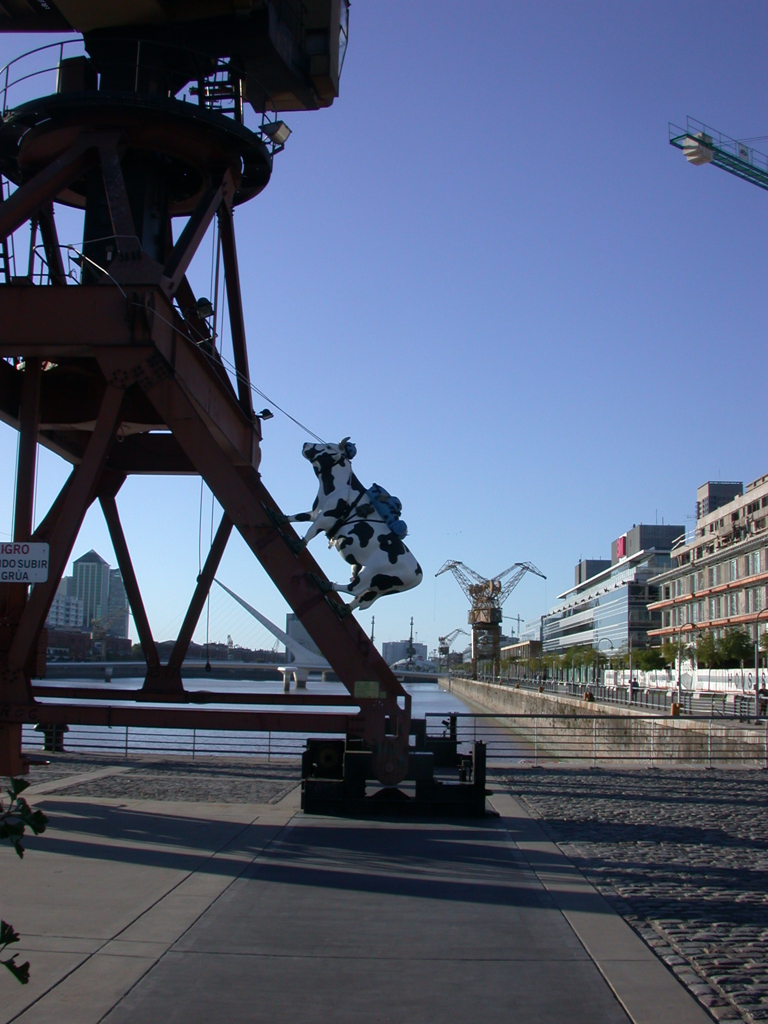 Climbing Cow, Puerto Madero, Buenos Aires, Argentina
