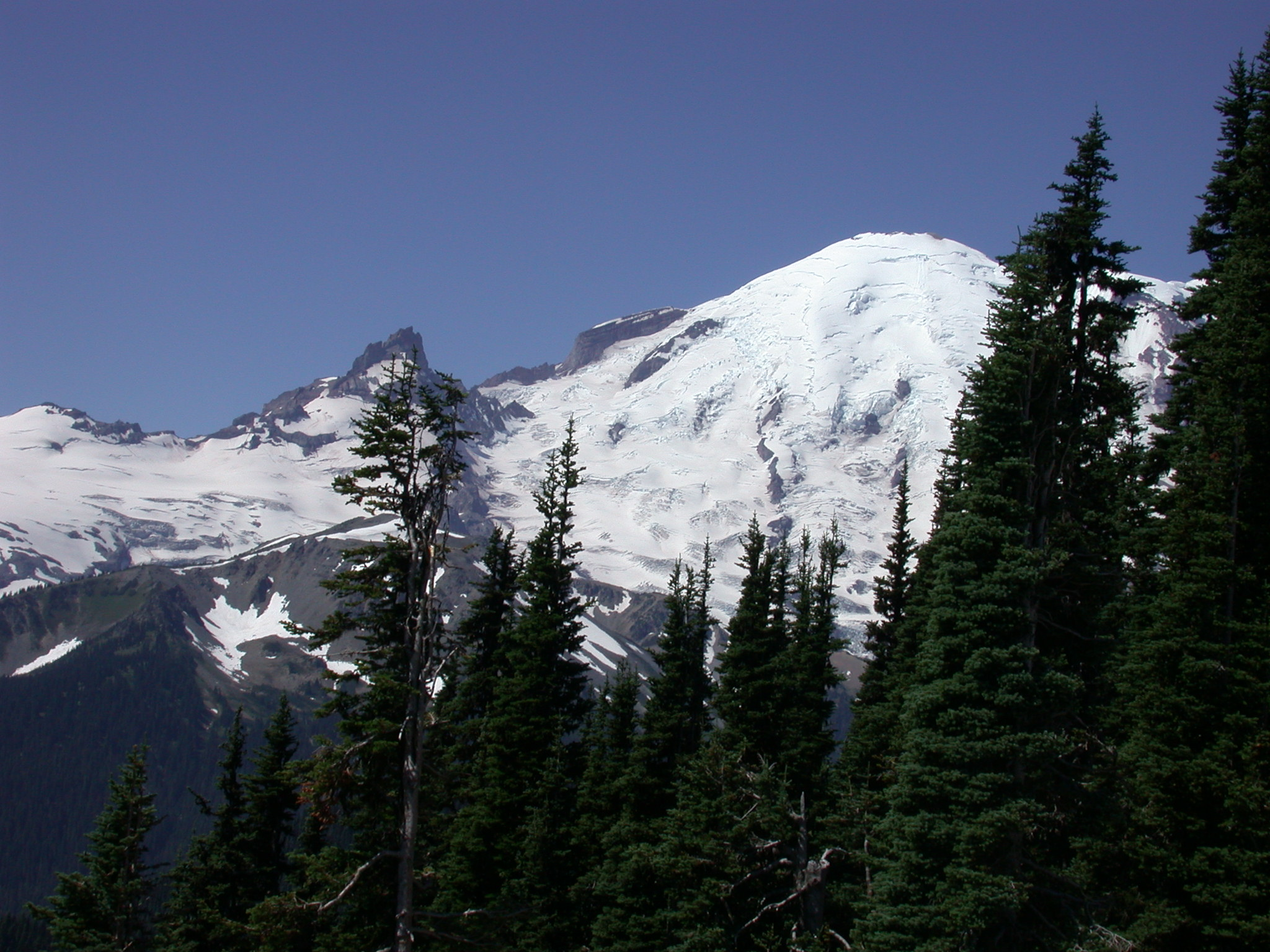 Grandmother Rainier Towering Above the Pines