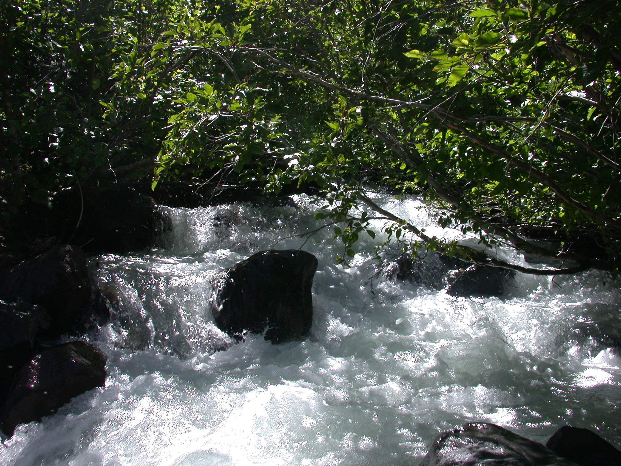 Roaring Stream on Glacier Trail of Mount Rainier