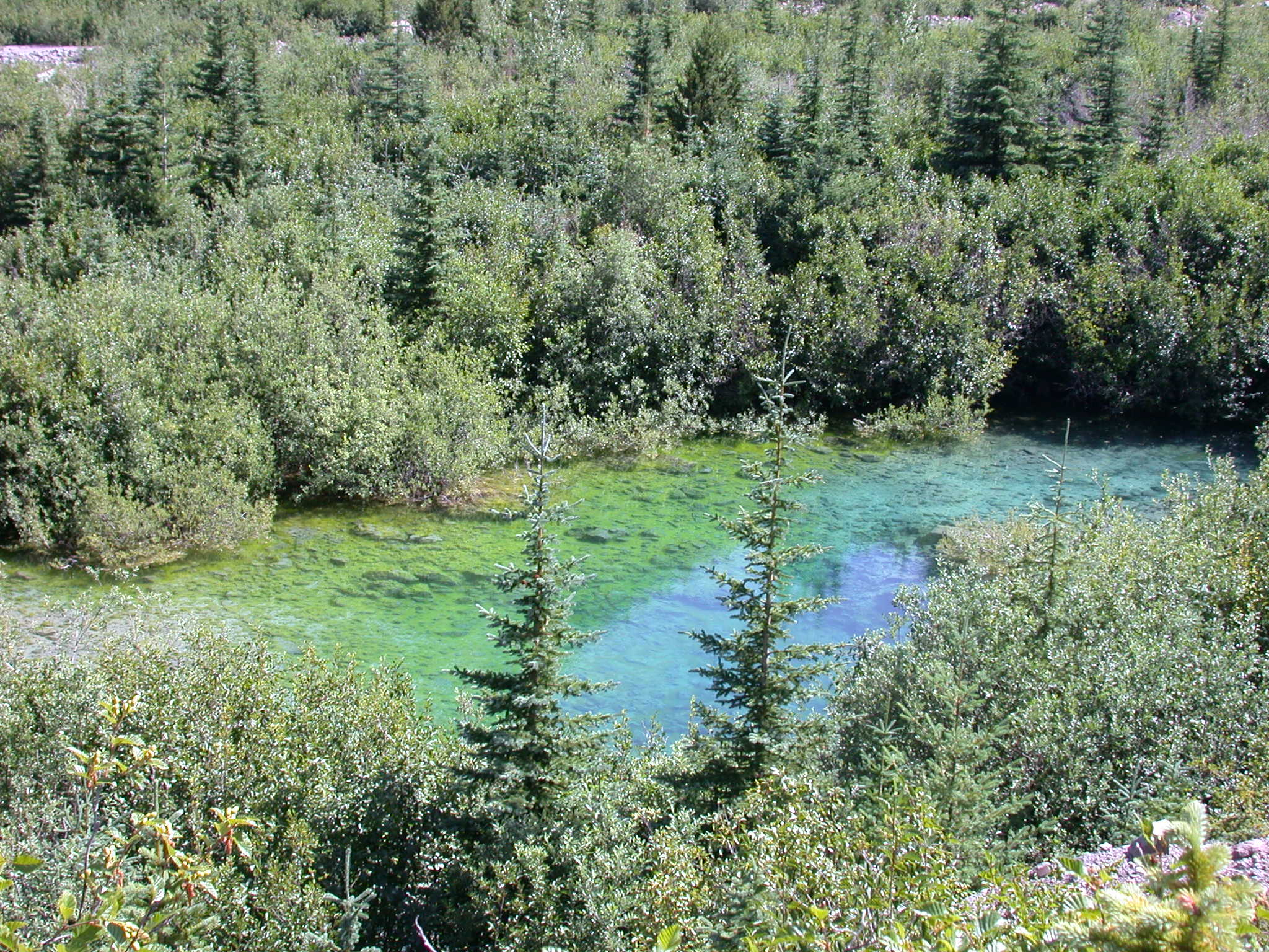 Green Glacial Pond in Glacier Valley of Mount Rainier