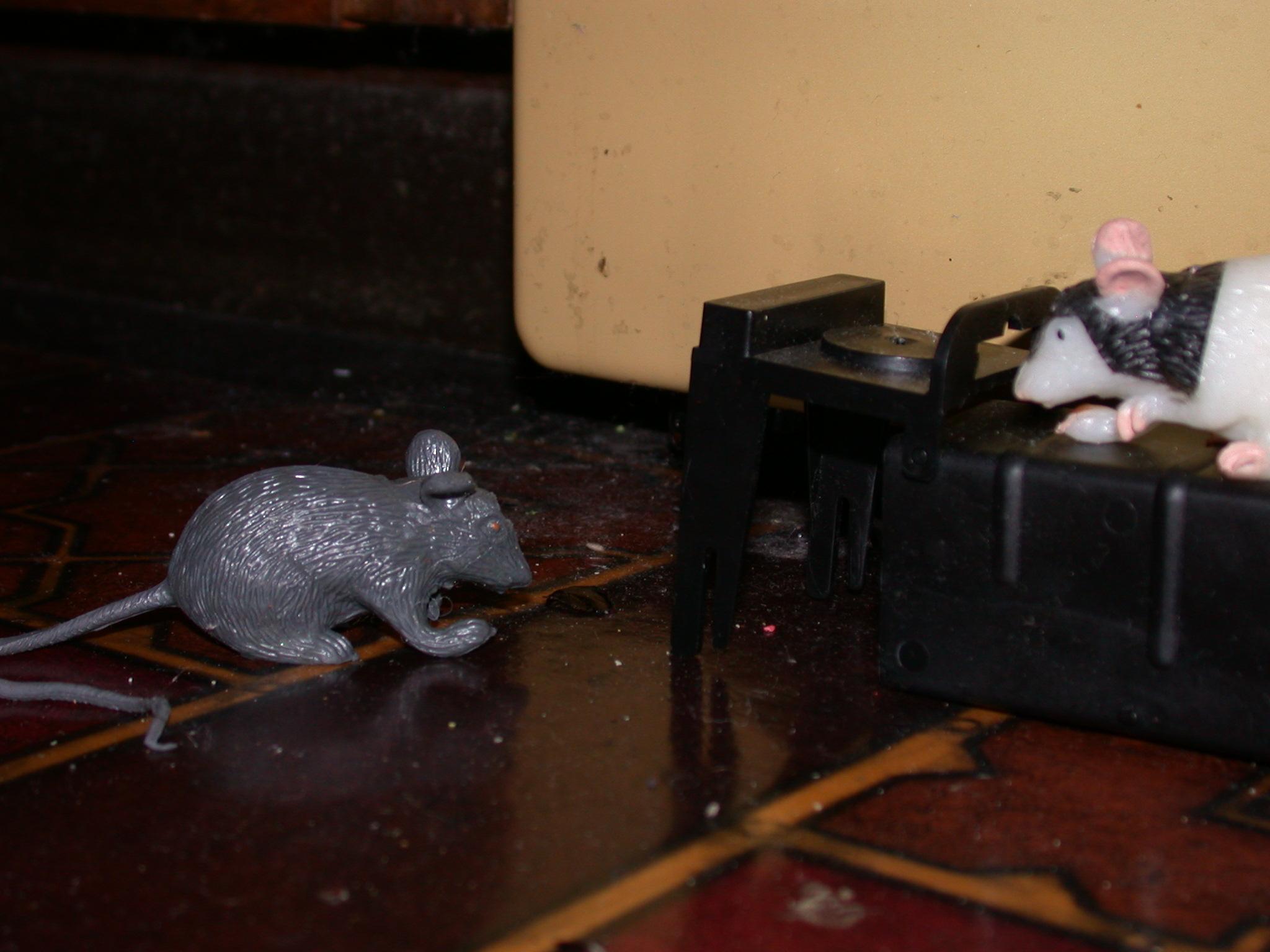 Mice Foil the Live Trap