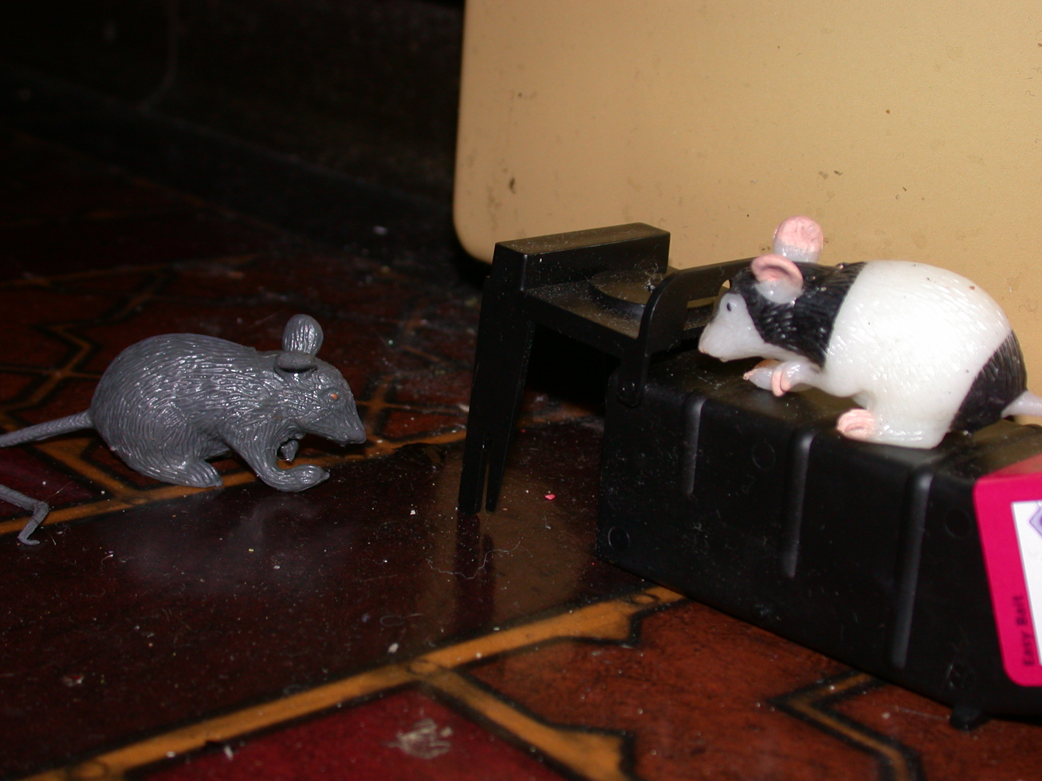 Mice Are Clever and Plastic