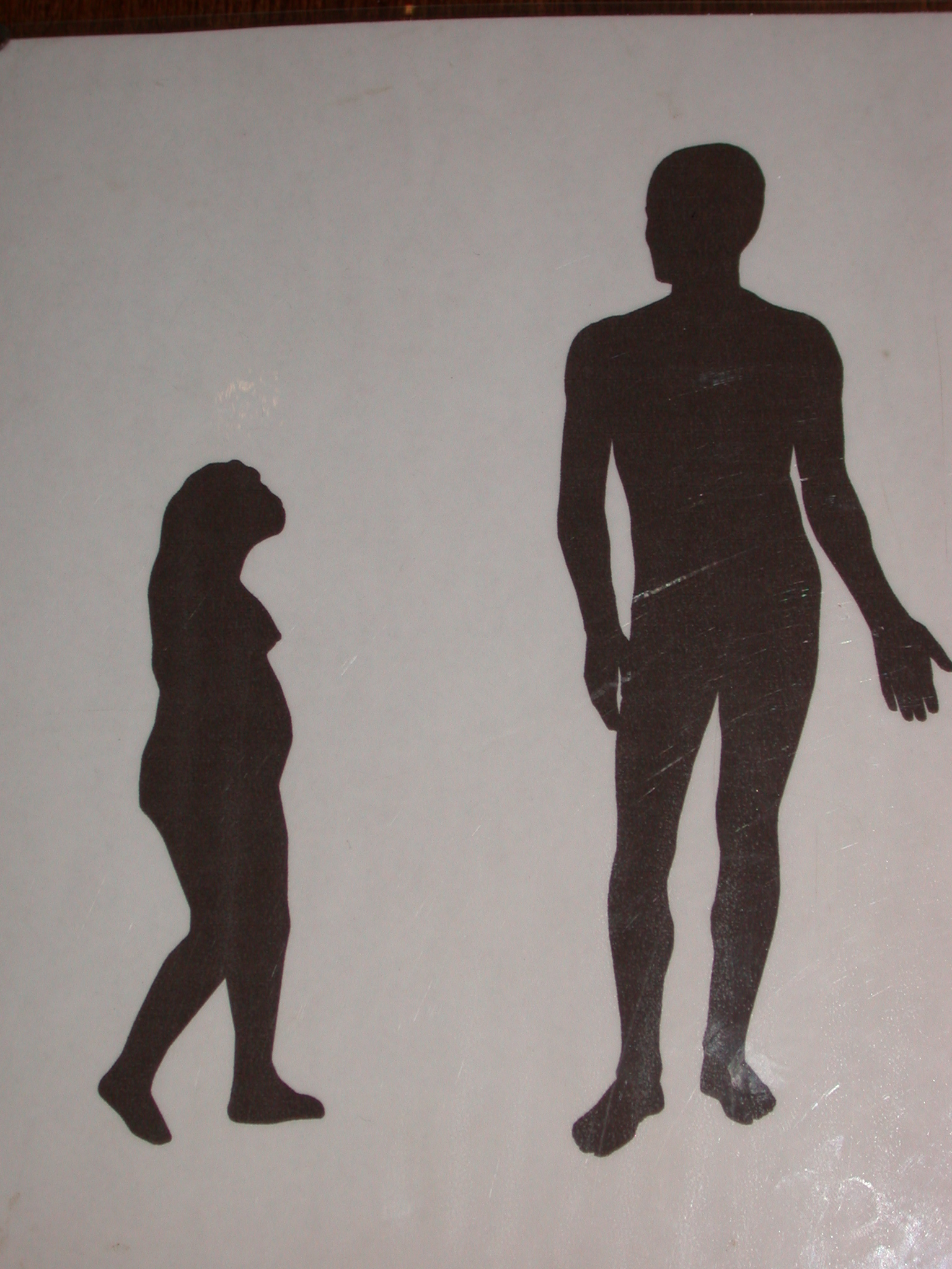 Relative Size of Lucy and Modern Human, National Museum, Addis Ababa, Ethiopia