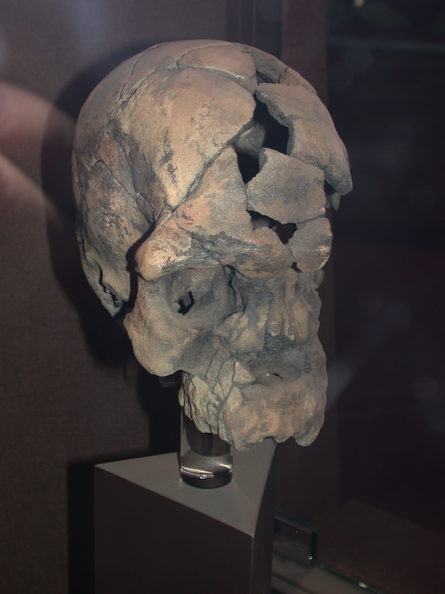 Herto Idaltu Skull Replica View 3, National Museum, Addis Ababa, Ethiopia