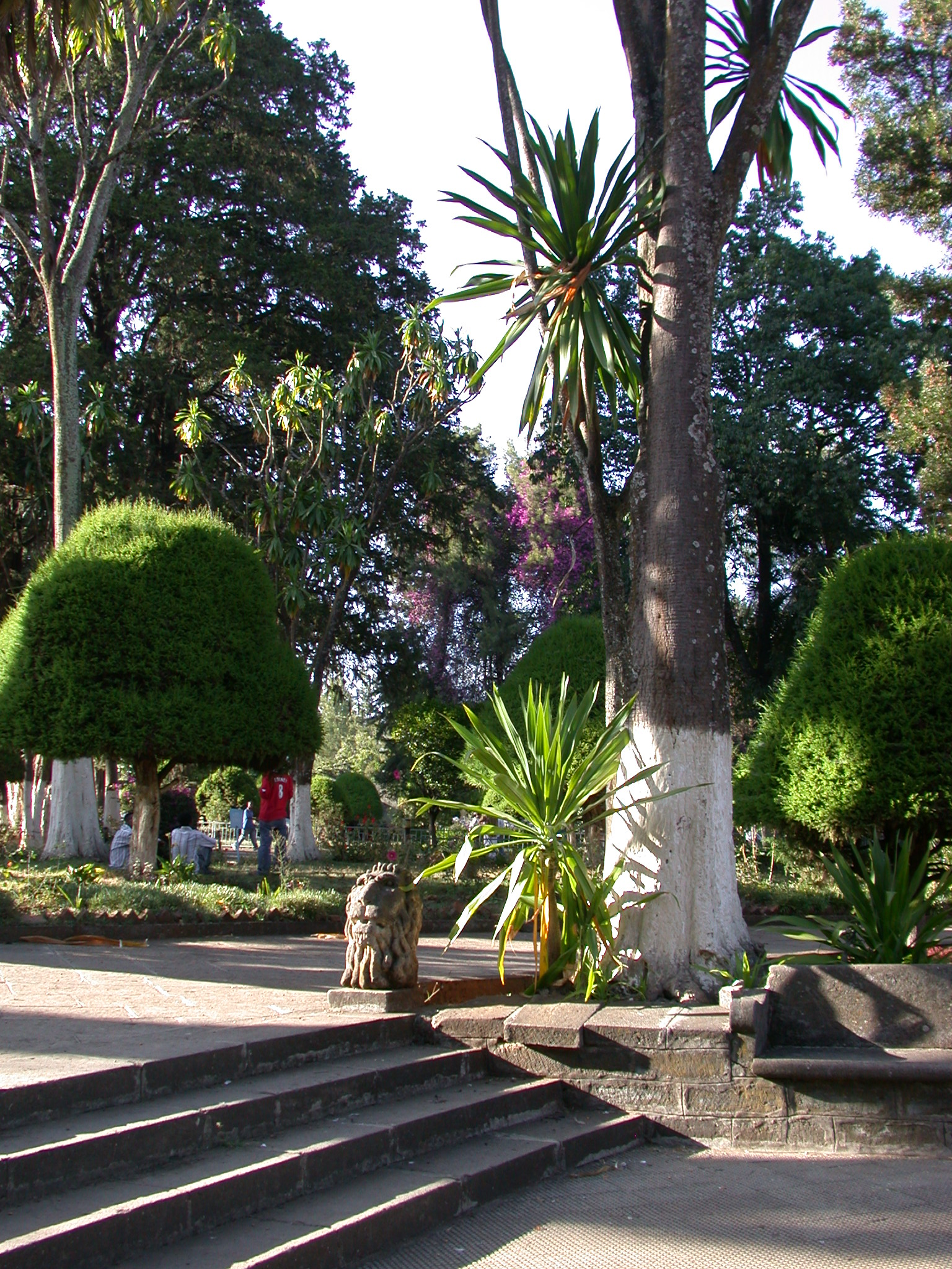 Grounds of Addis Ababa University, Addis Ababa, Ethiopia