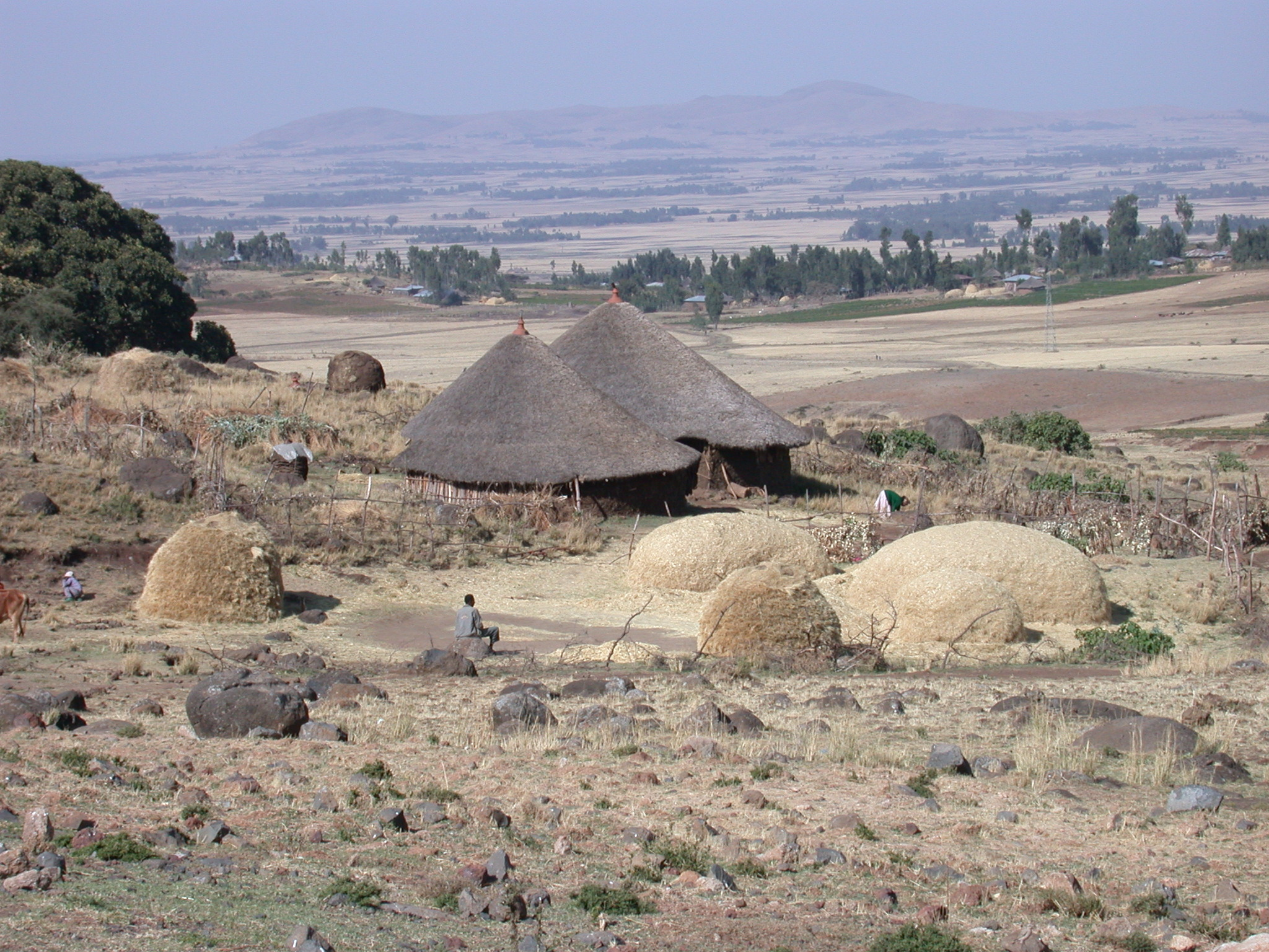 Tukuls and Teff Mounds, Countryside Between Addis Ababa and Melka Kunture, Ethiopia