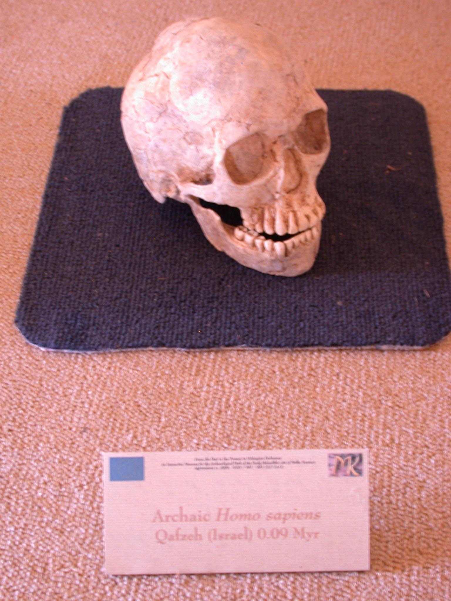 Homo Sapiens Skull Replica, 90,000 Years Ago, From Qafzeh, Israel, Melka Kunture, Ethiopia