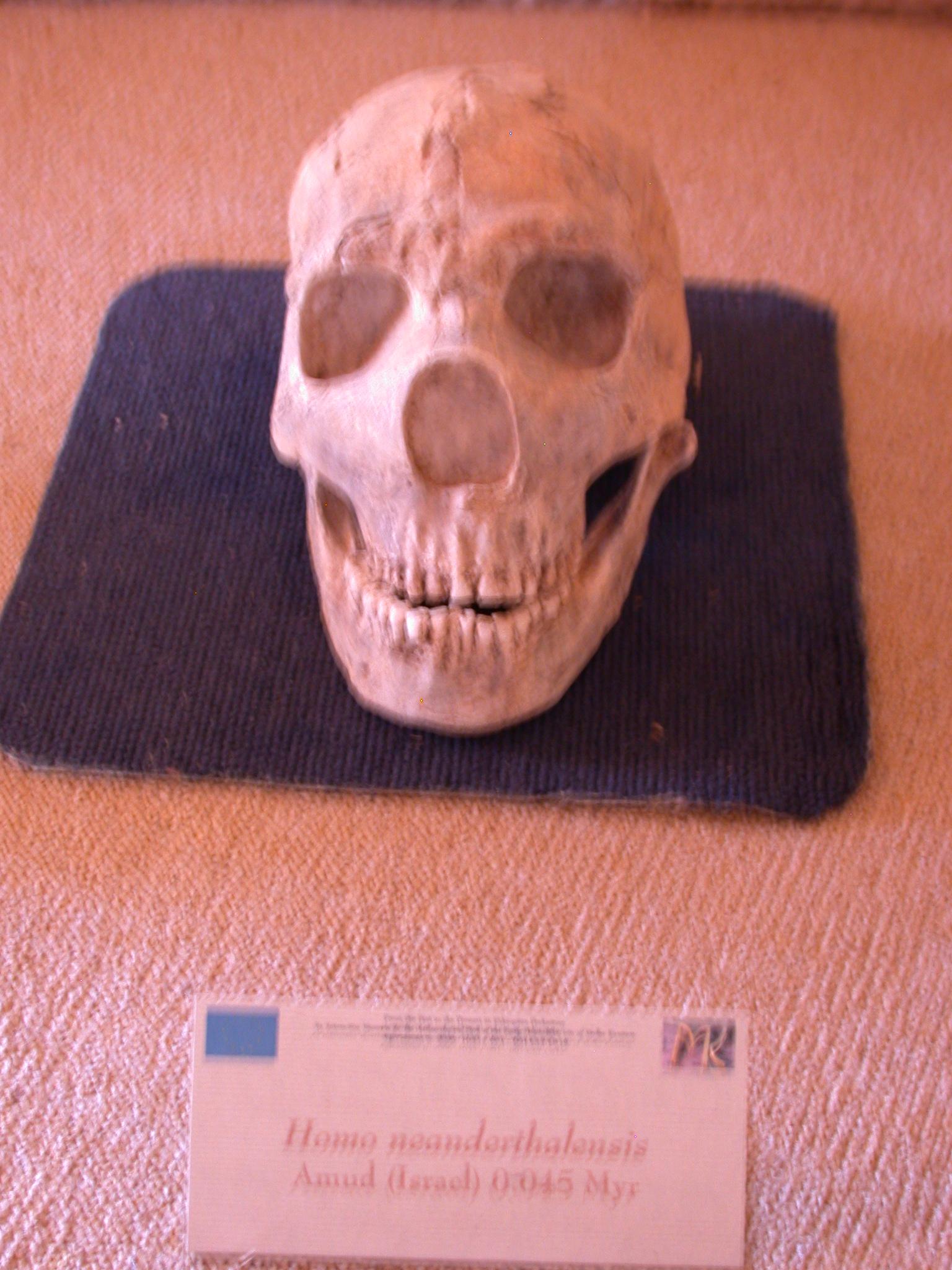 Homo Neanderthalensis Skull Replica, 45,000 Years Ago, From Amud, Israel, Melka Kunture, Ethiopia