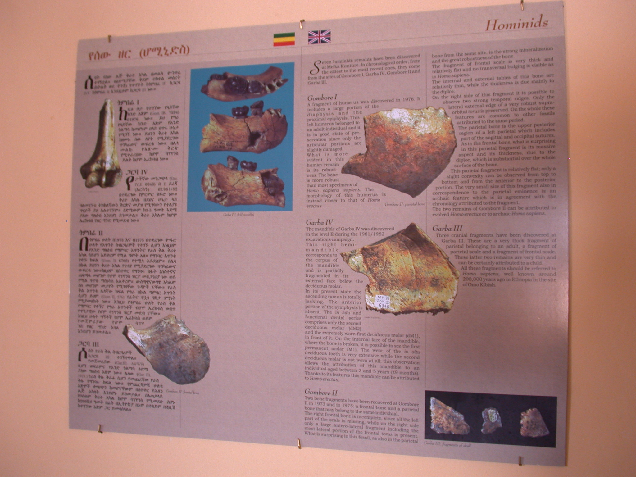 Hominids Poster, Melka Kunture, Ethiopia