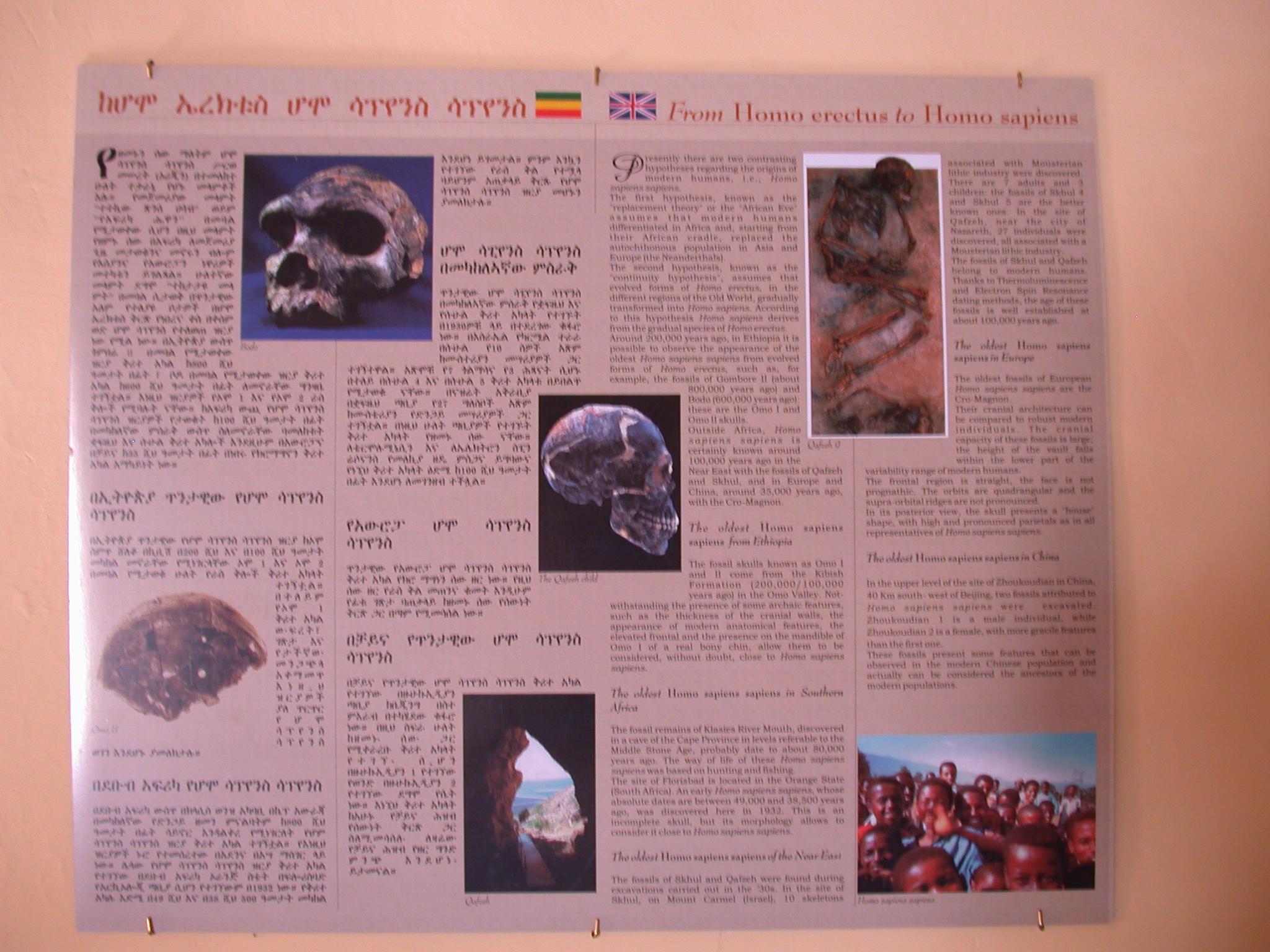 From Homo Erectus to Homo Sapiens Poster, Melka Kunture, Ethiopia