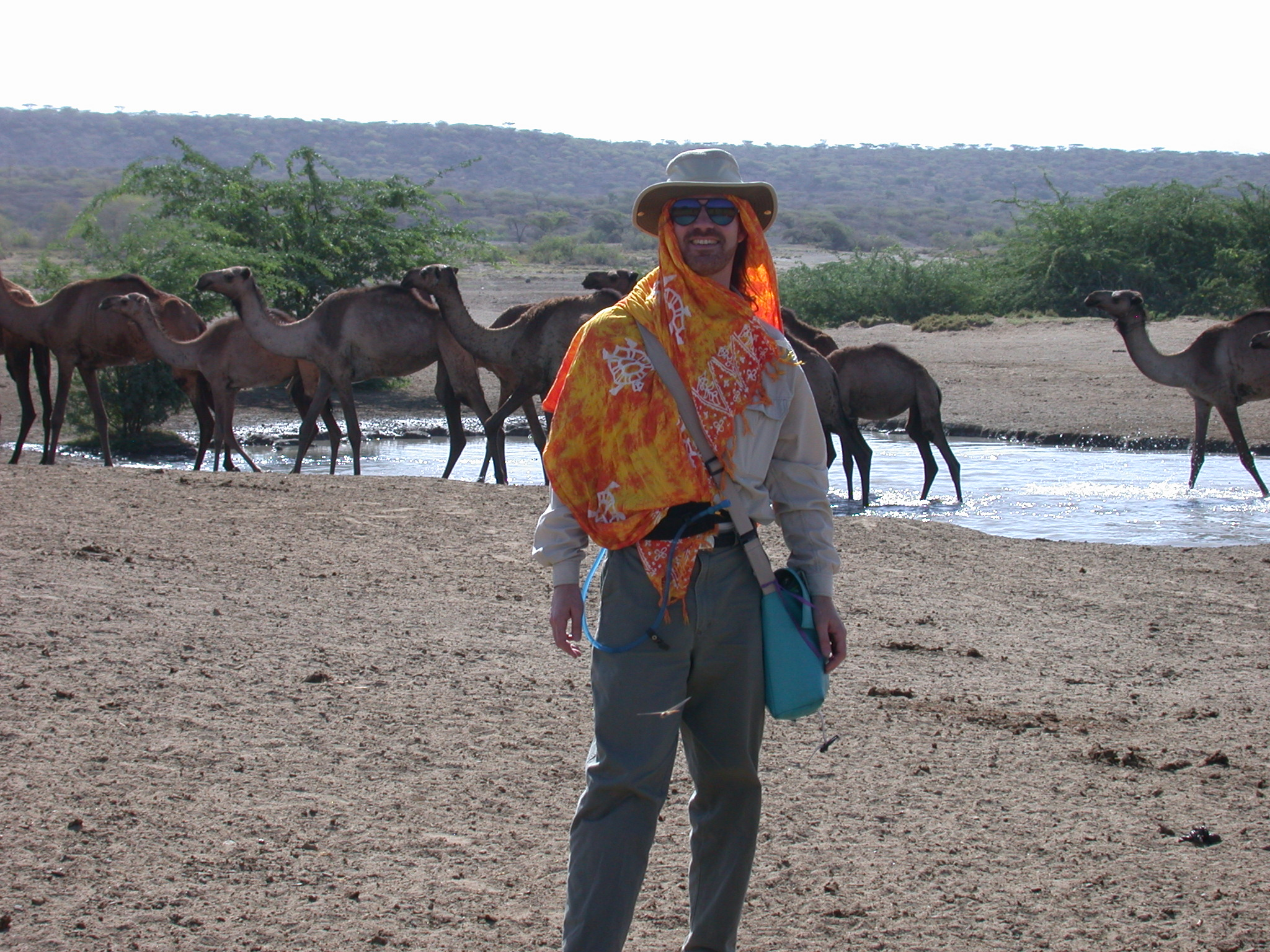 Will With Camel Herd at Hot Springs Near Bilen Lodge, Afar, Awash, Ethiopia