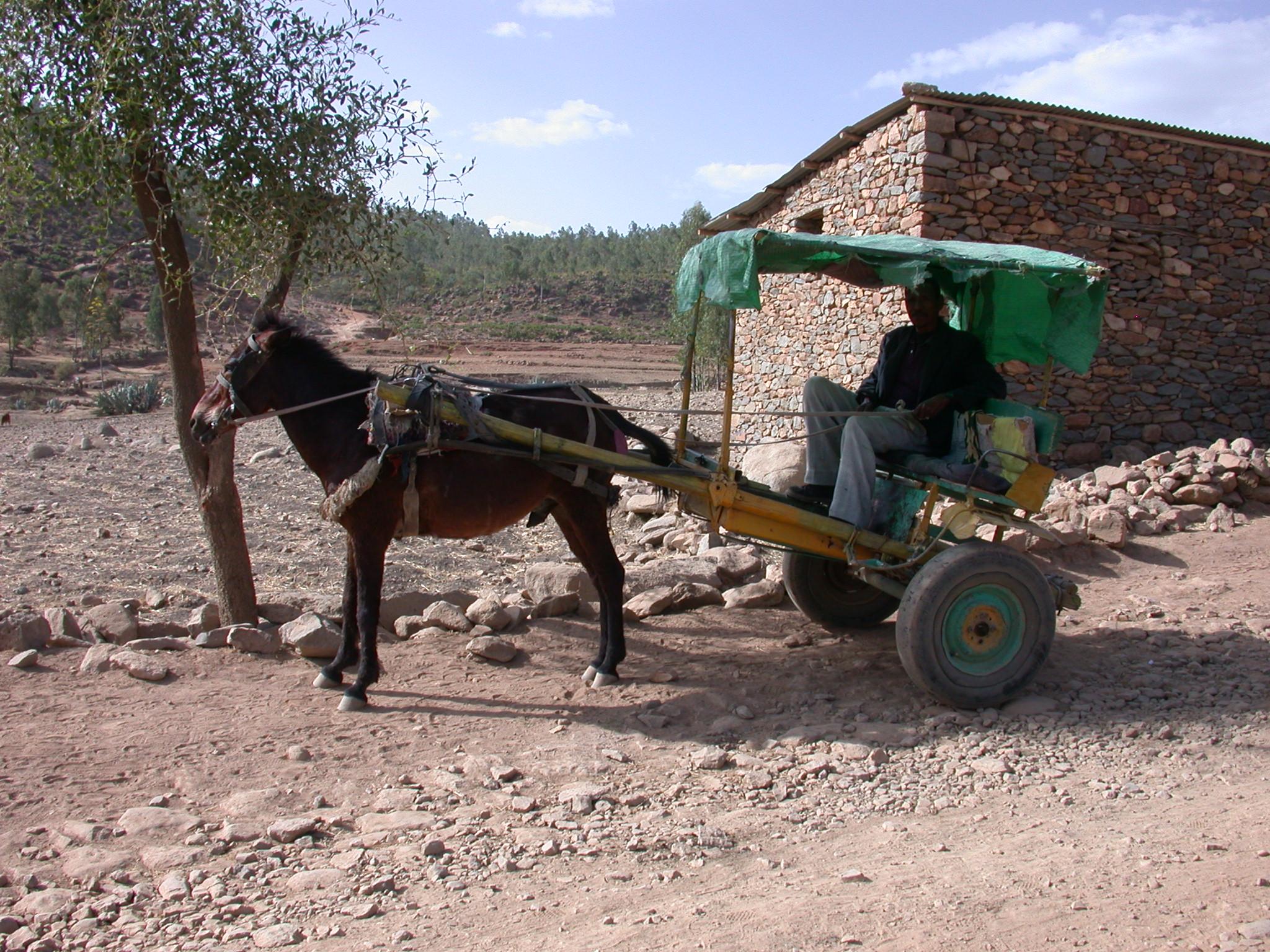 Horse Taxi in Axum, Tigrai, Ethiopia