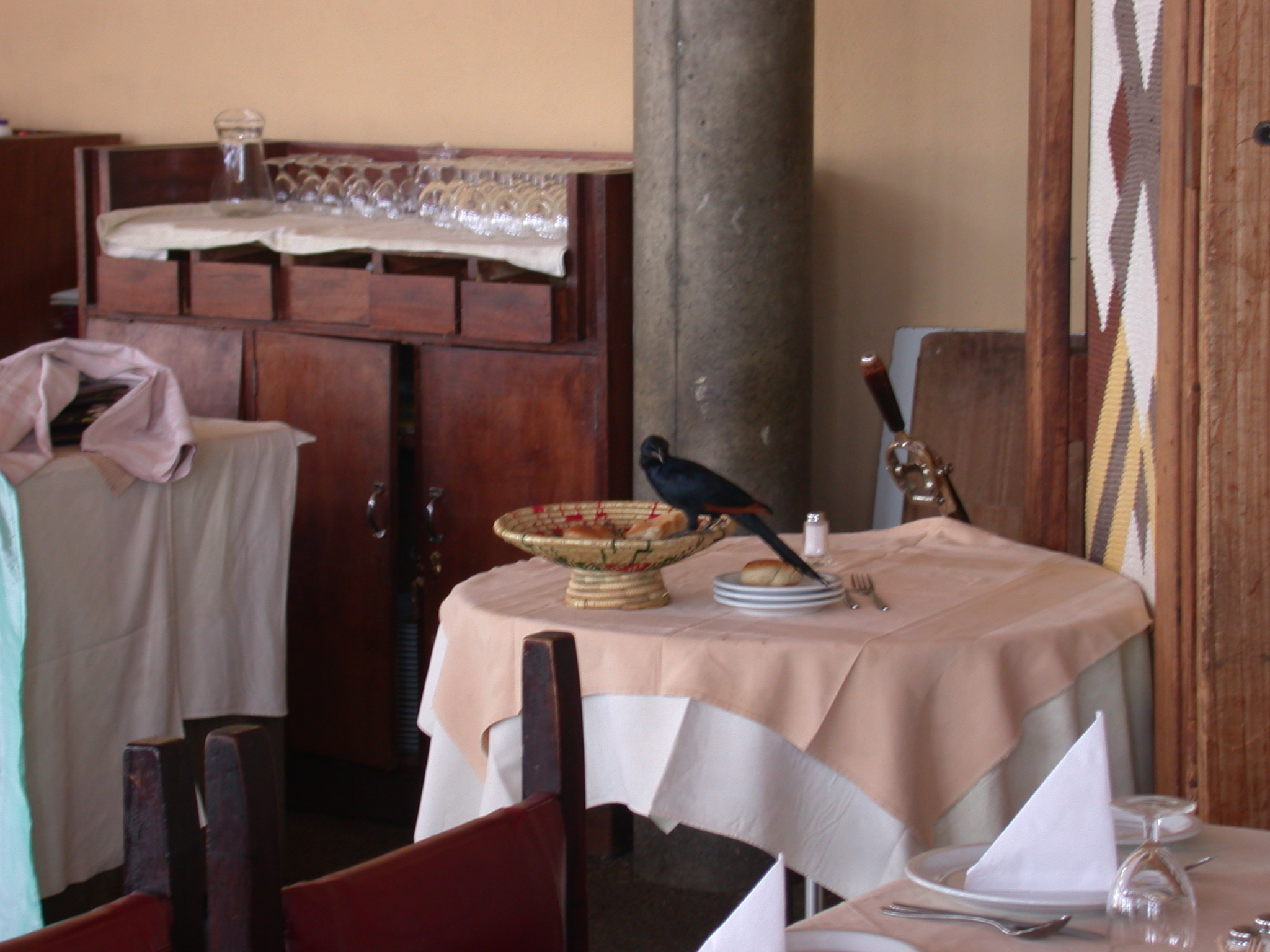 Bird at Dining Room of Goha Hotel, Gonder, Ethiopia