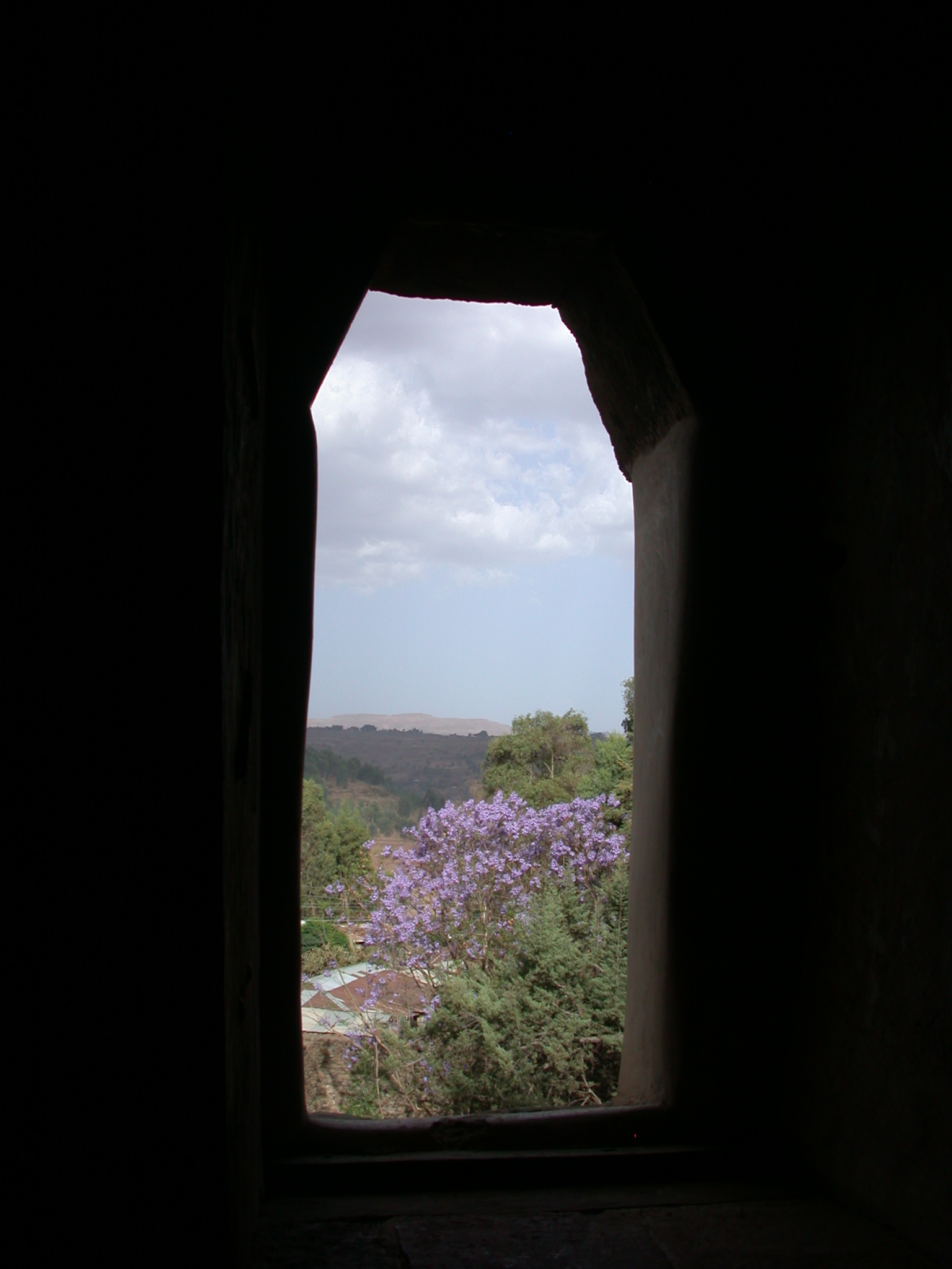 View of Jacaranda From Palace, Fasil Ghebbi Royal Enclosure, Gonder, Ethiopia
