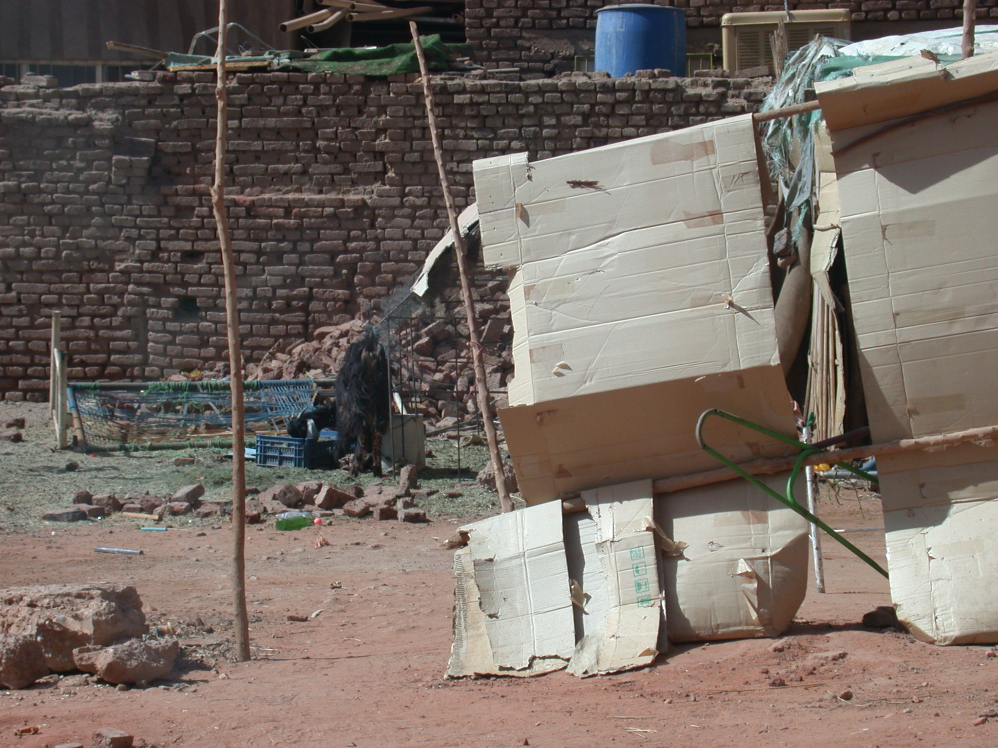 Goat and Temporary Housing, Khartoum, Sudan