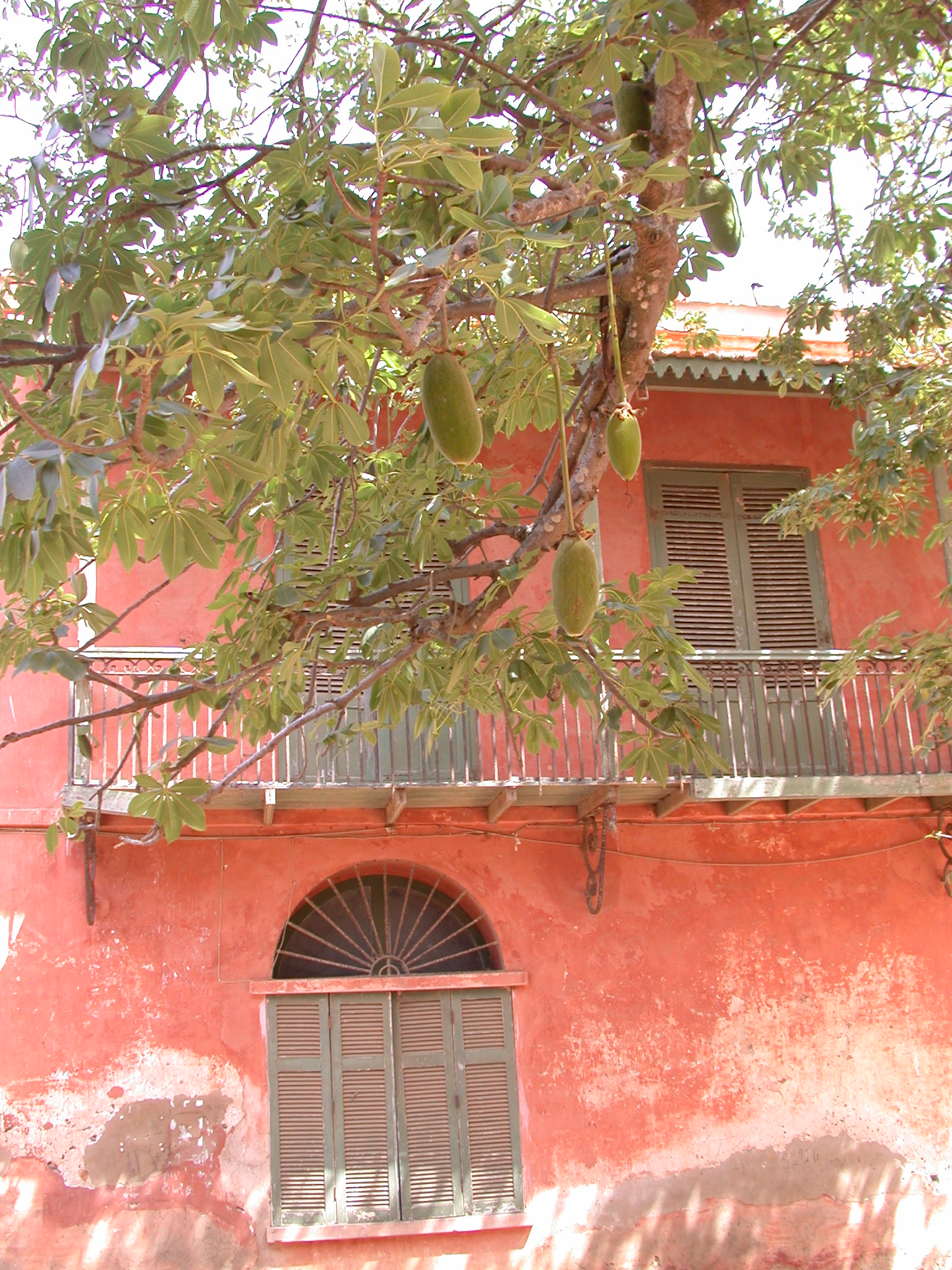 Jackfruits in Front of Colorful Old House, Ile de Goree, Dakar, Senegal