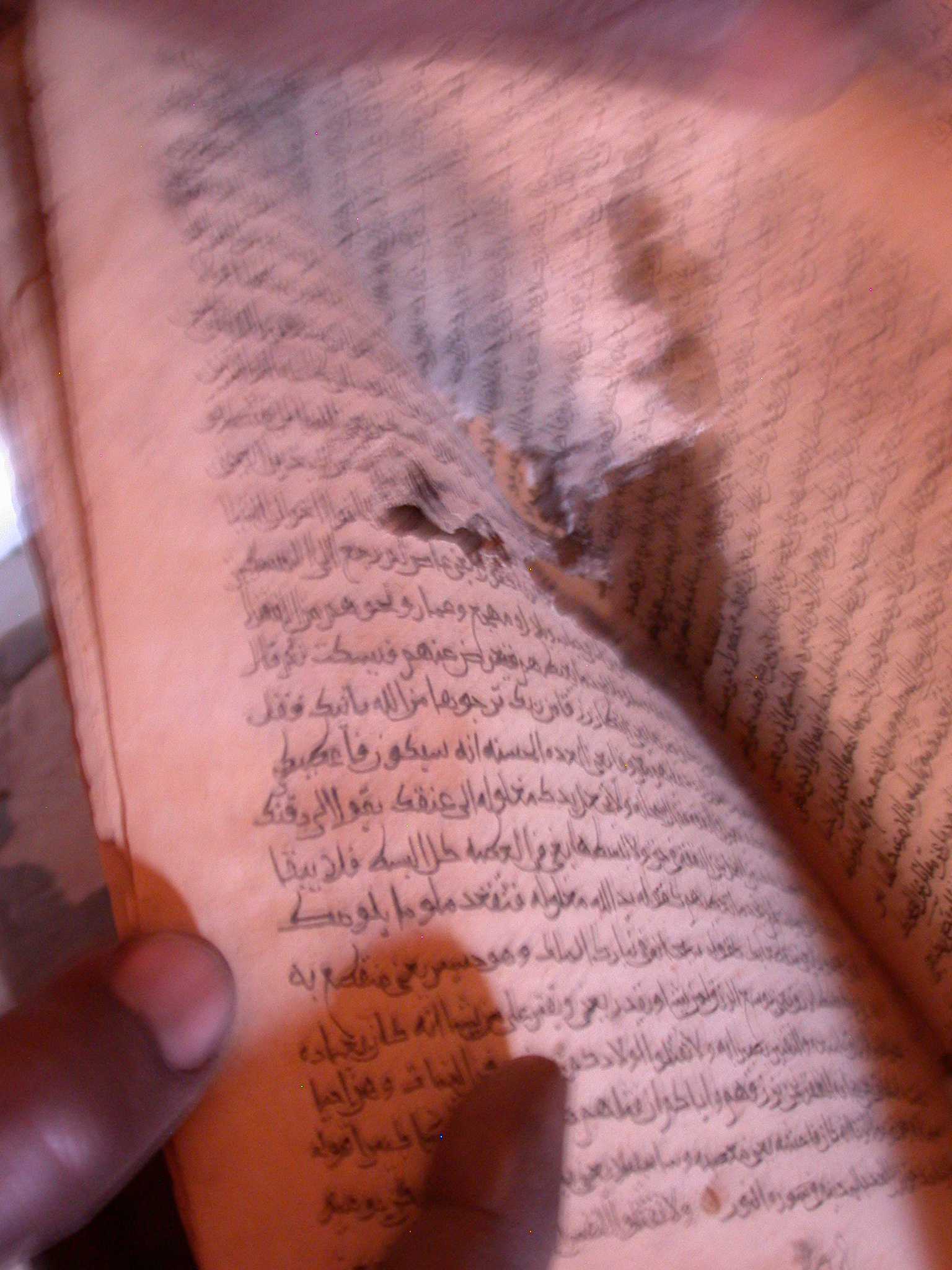 Termite-Eaten Book at Library in Ancient City of Oulata, Mauritania