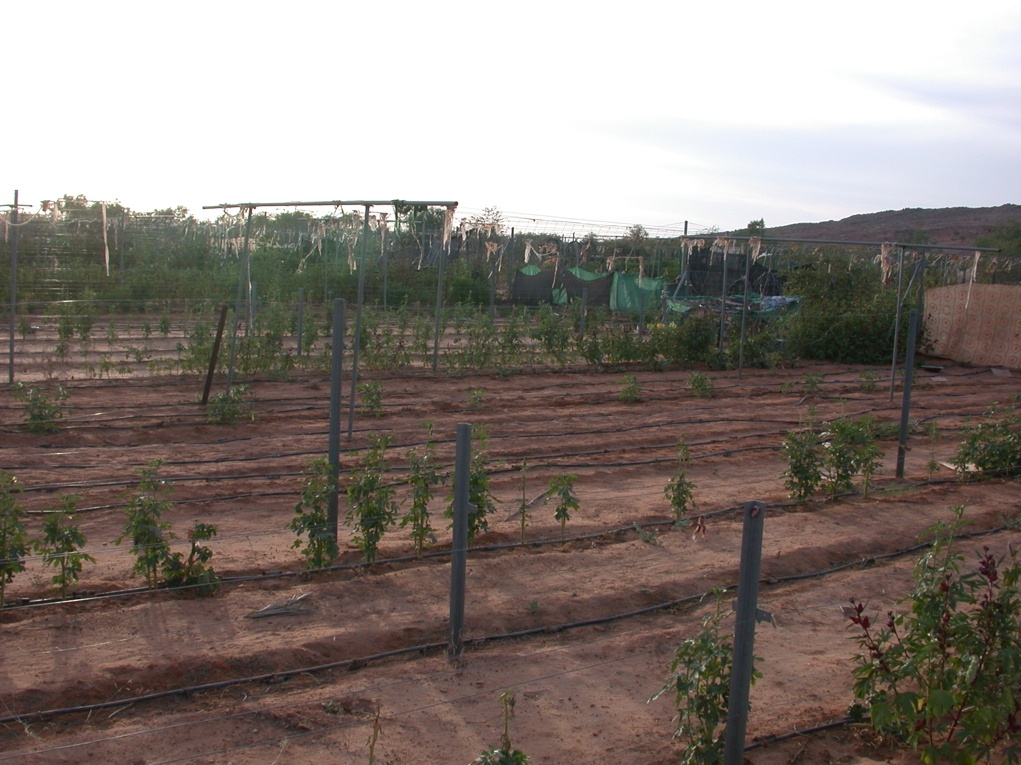 Farming Cooperative Project in Oualata, Mauritania