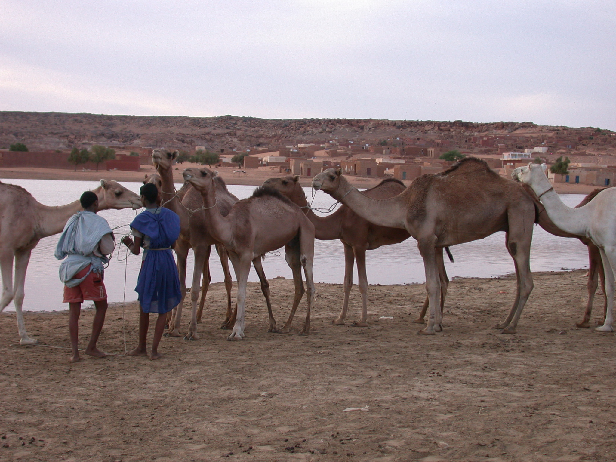 Camels and Tenders at Reservoir, Oualata, Mauritania