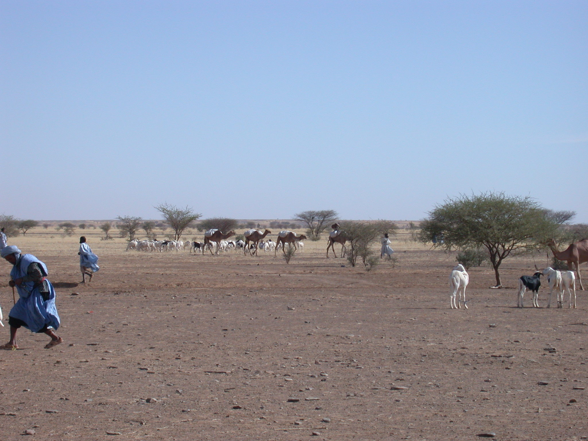Scenery Along Route From Oualata to Nema, Mauritania