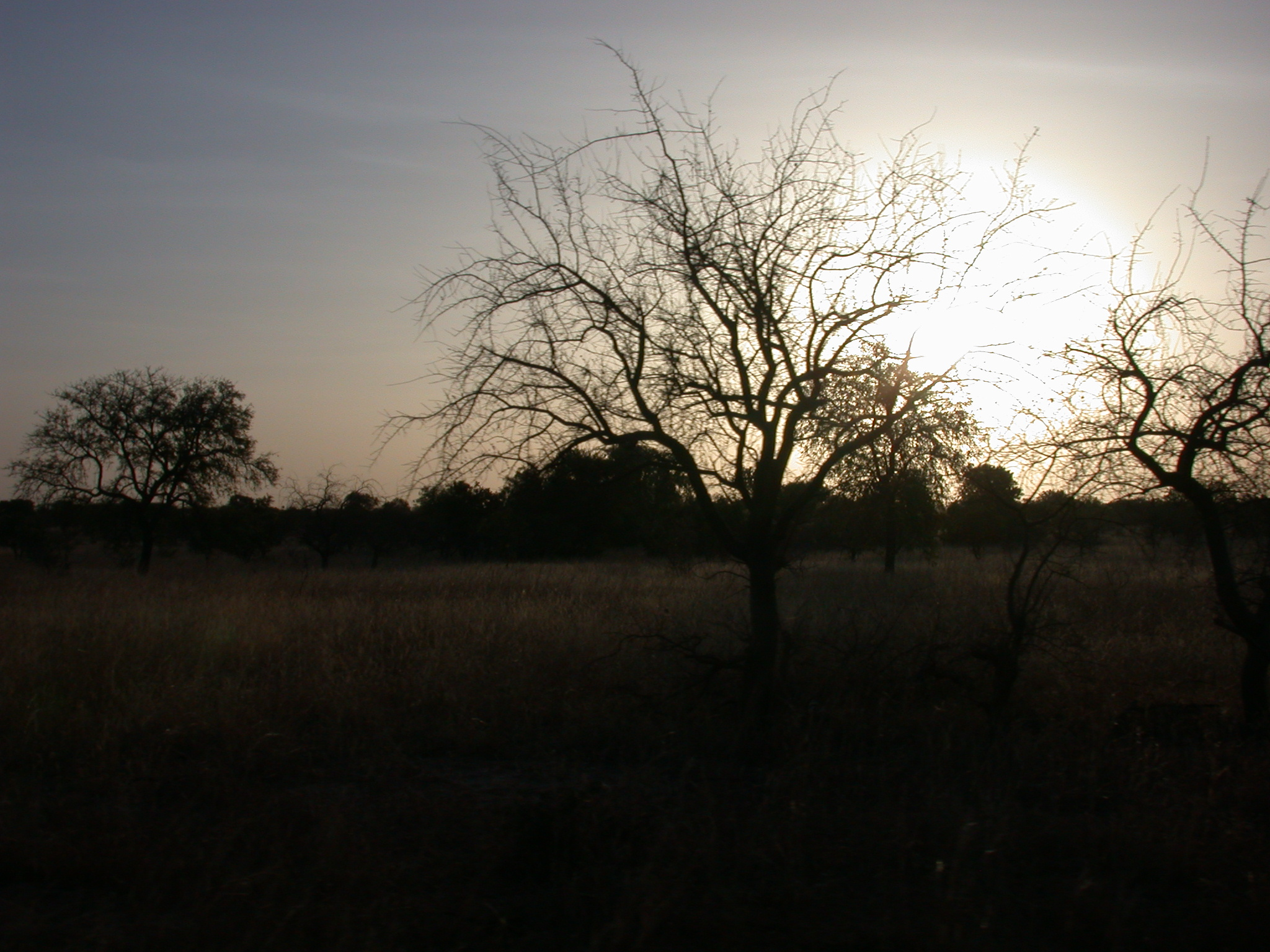 Sunset on the Route Between Nara and Sokolo, Mali