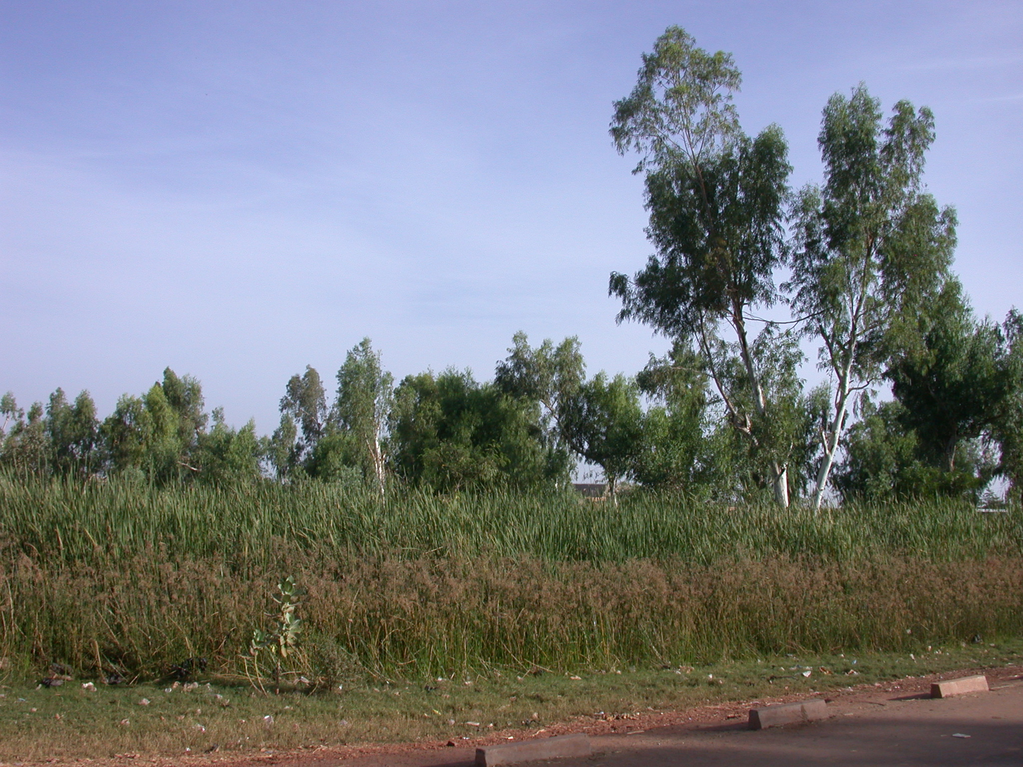 Landscape Outside Niono, Mali