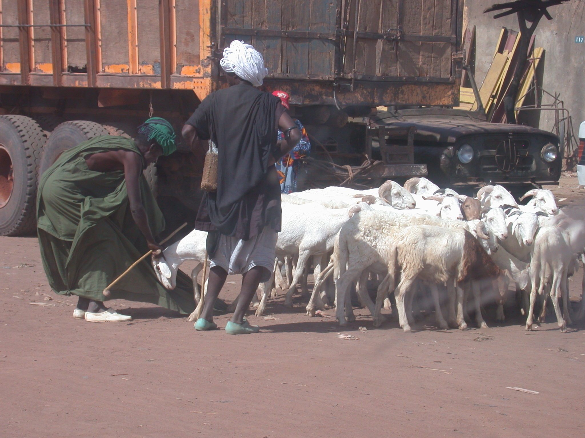 Goat Sale in Nioro, Mali