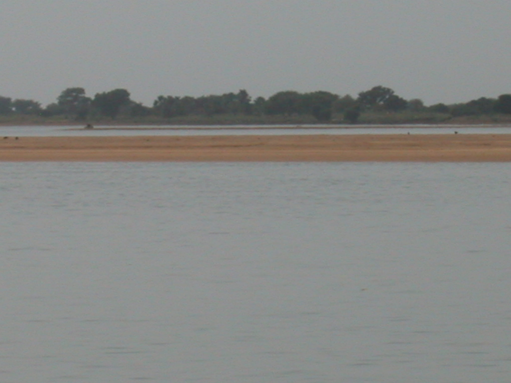View of Niger Riger From Pinasse Boat at Massina, Mali