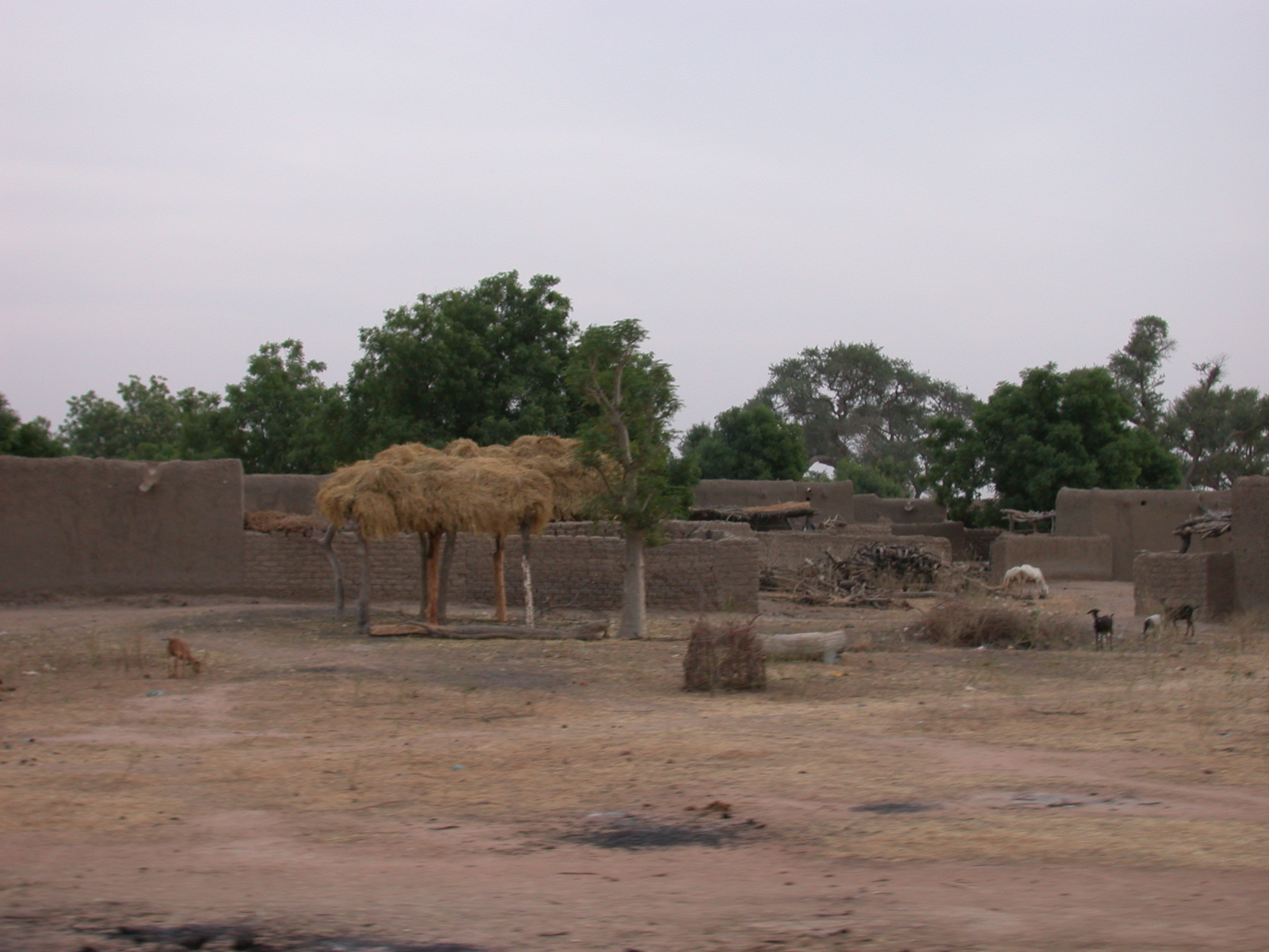 Landscape on Road From Massina to Say, Mali