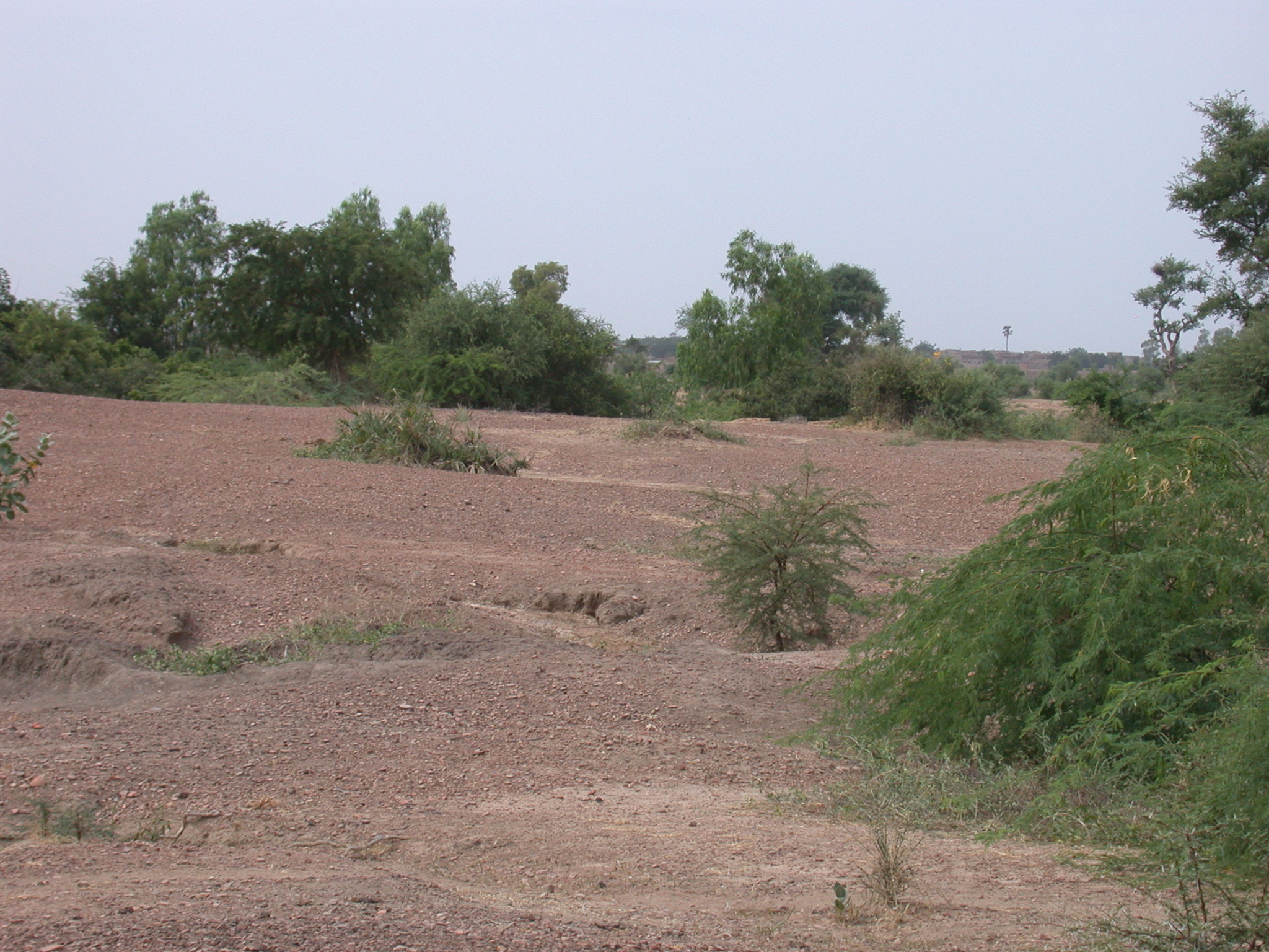 Ruins of Ancient City of Jenne-Jeno, Mali