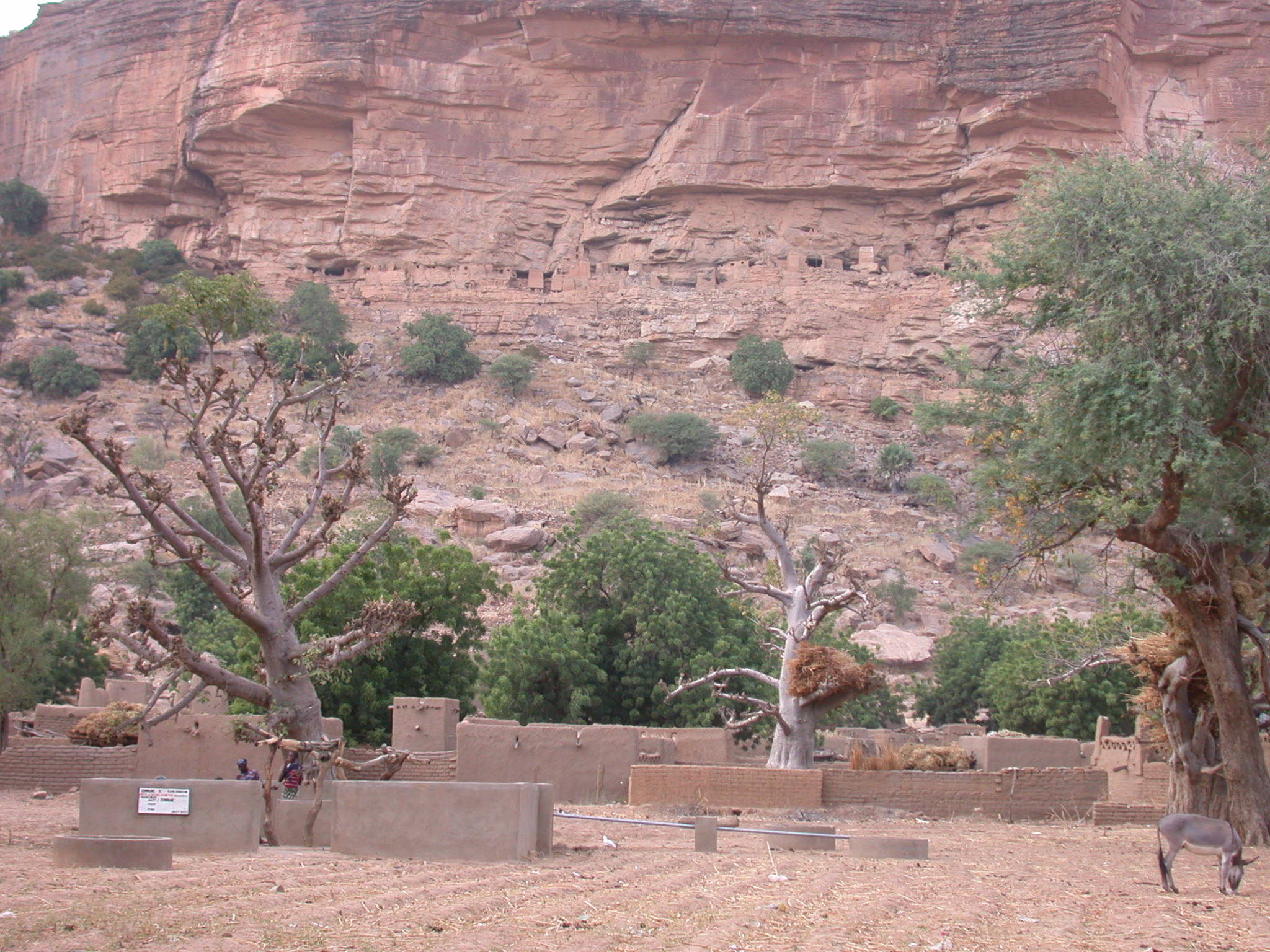 Baobab Trees in Front of Falaise Escarpment in Ennde Village, Dogon Country, Mali