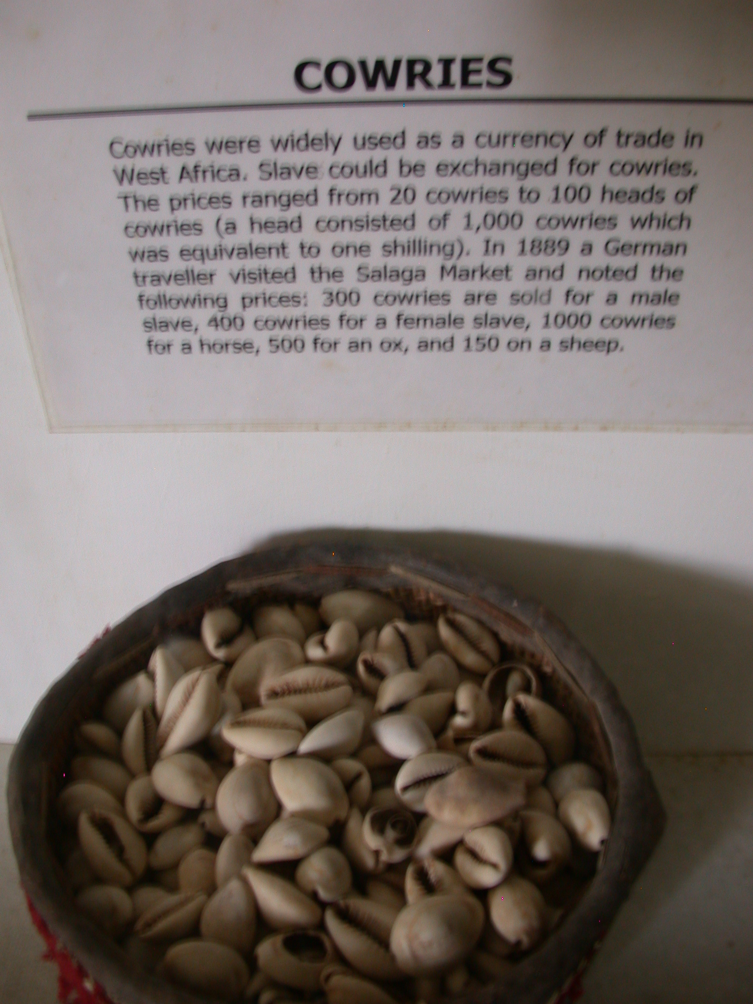 Cowries and Description, National Museum, Accra, Ghana