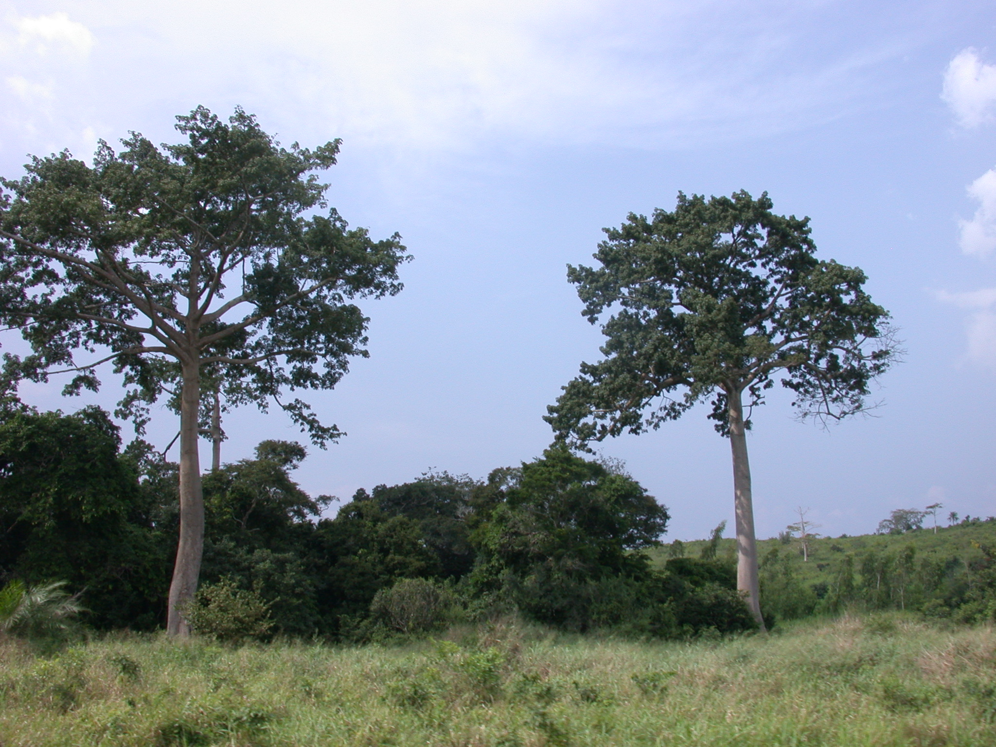 Landscape on Road From Accra to Cape Coast, Ghana
