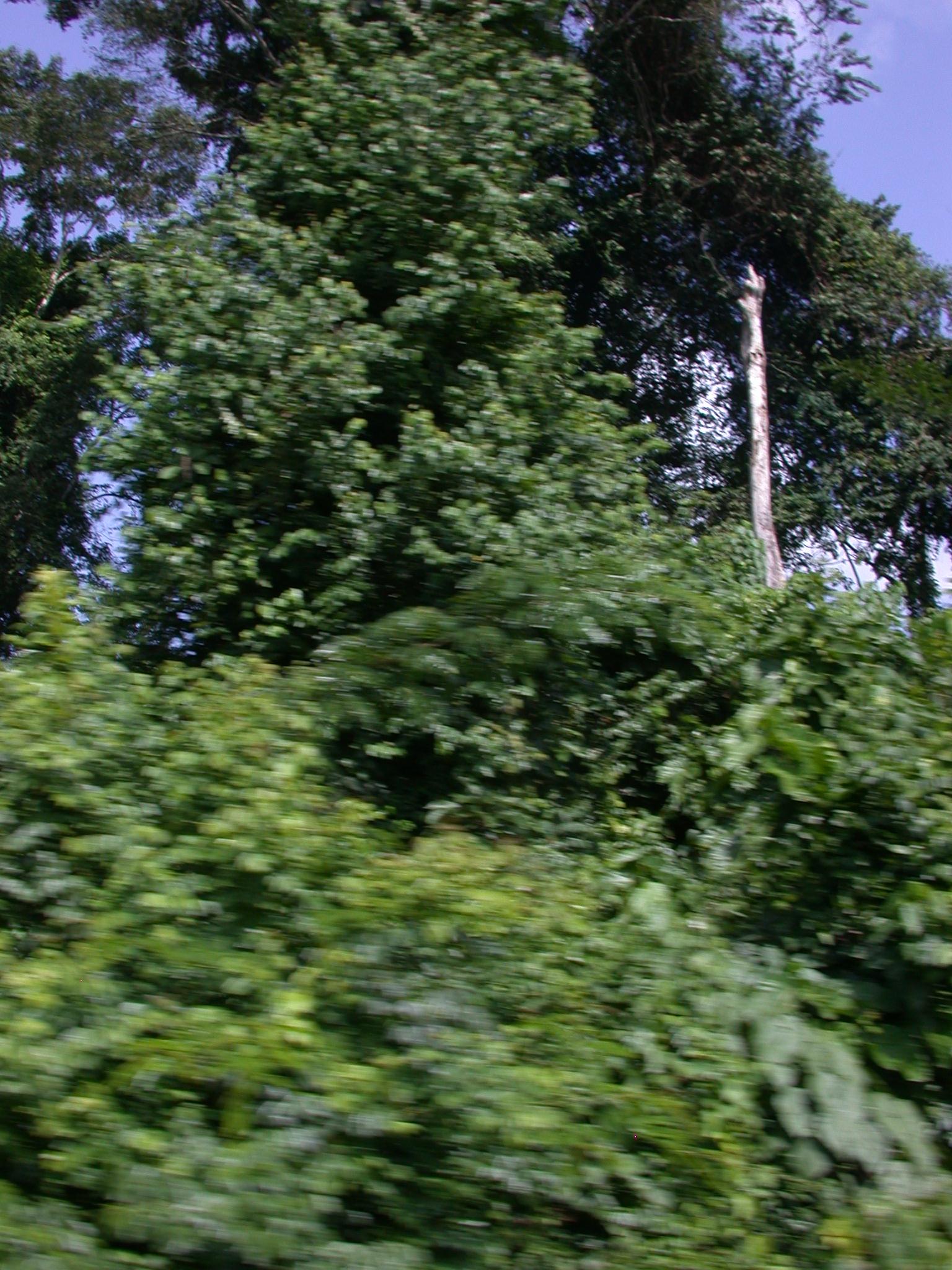 Landscape on Road From Cape Coast to Kumasi, Ghana