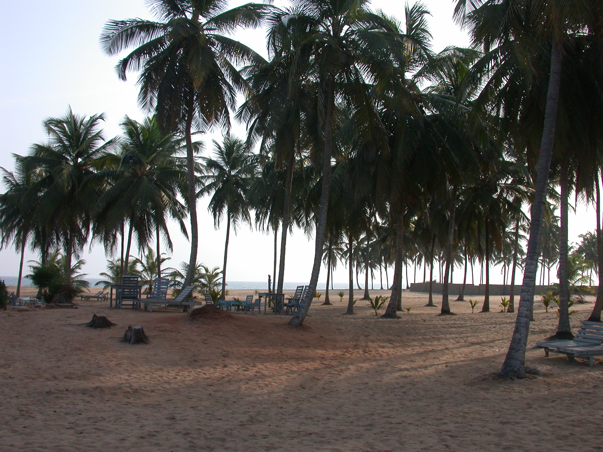 Beach and Palms, Hotel Jardin Brasilien, Ouidah, Benin