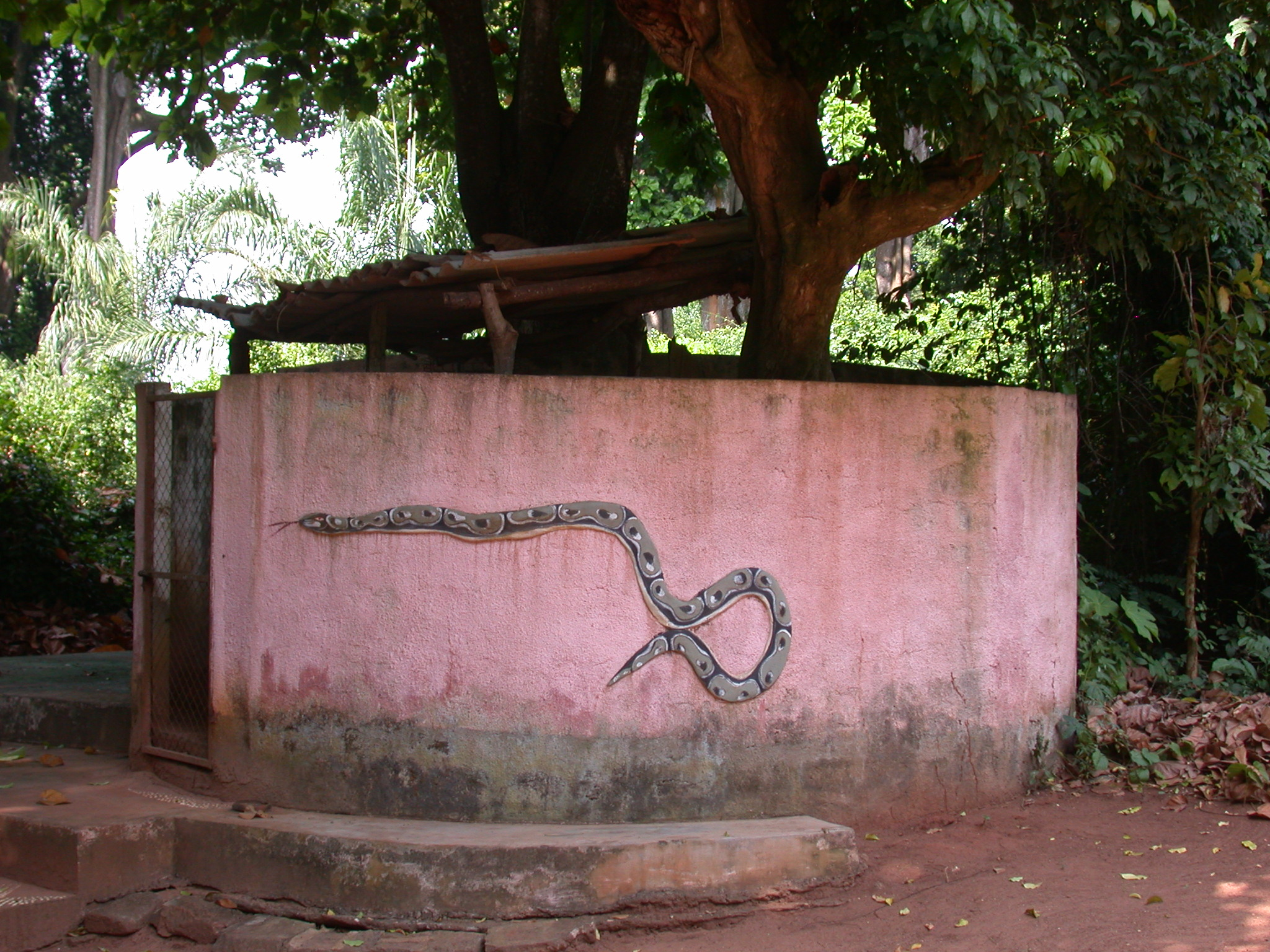 Python Enclosure, Kpasse Sacred Forest, Ouidah, Benin