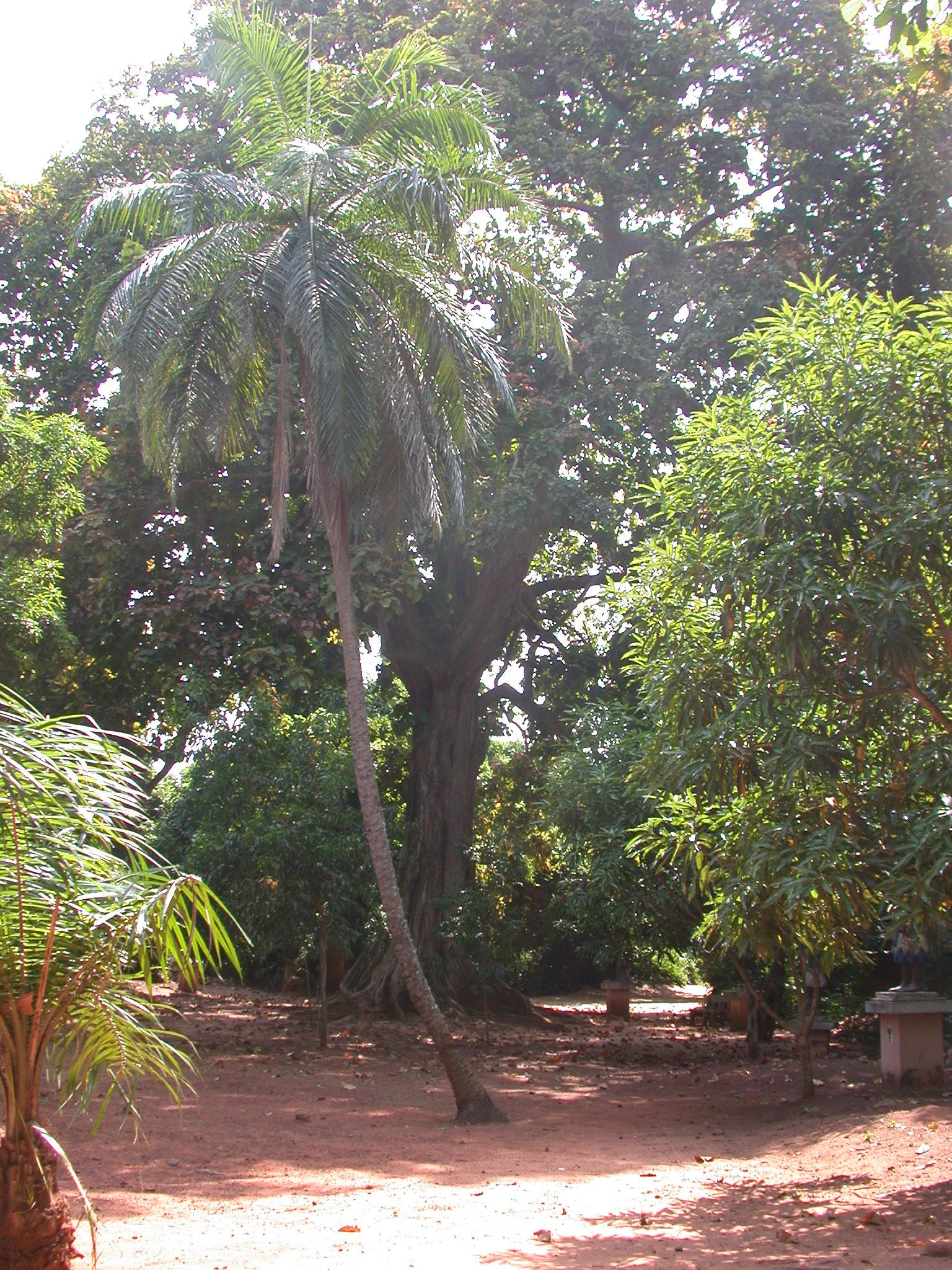 Vegetation, Kpasse Sacred Forest, Ouidah, Benin