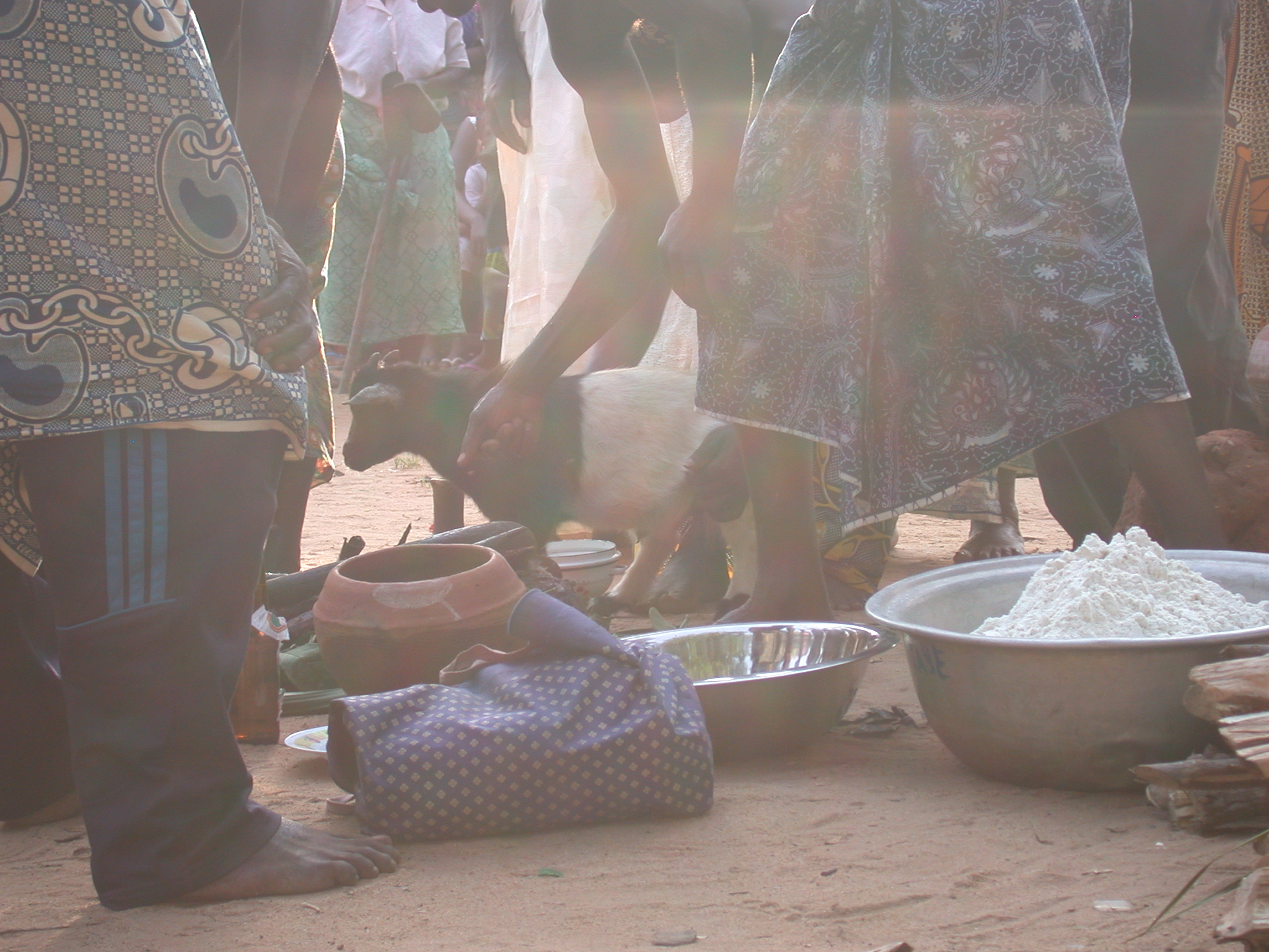 Preparing for Sacrifice of Goat, Vodun Ritual, Ouidah, Benin