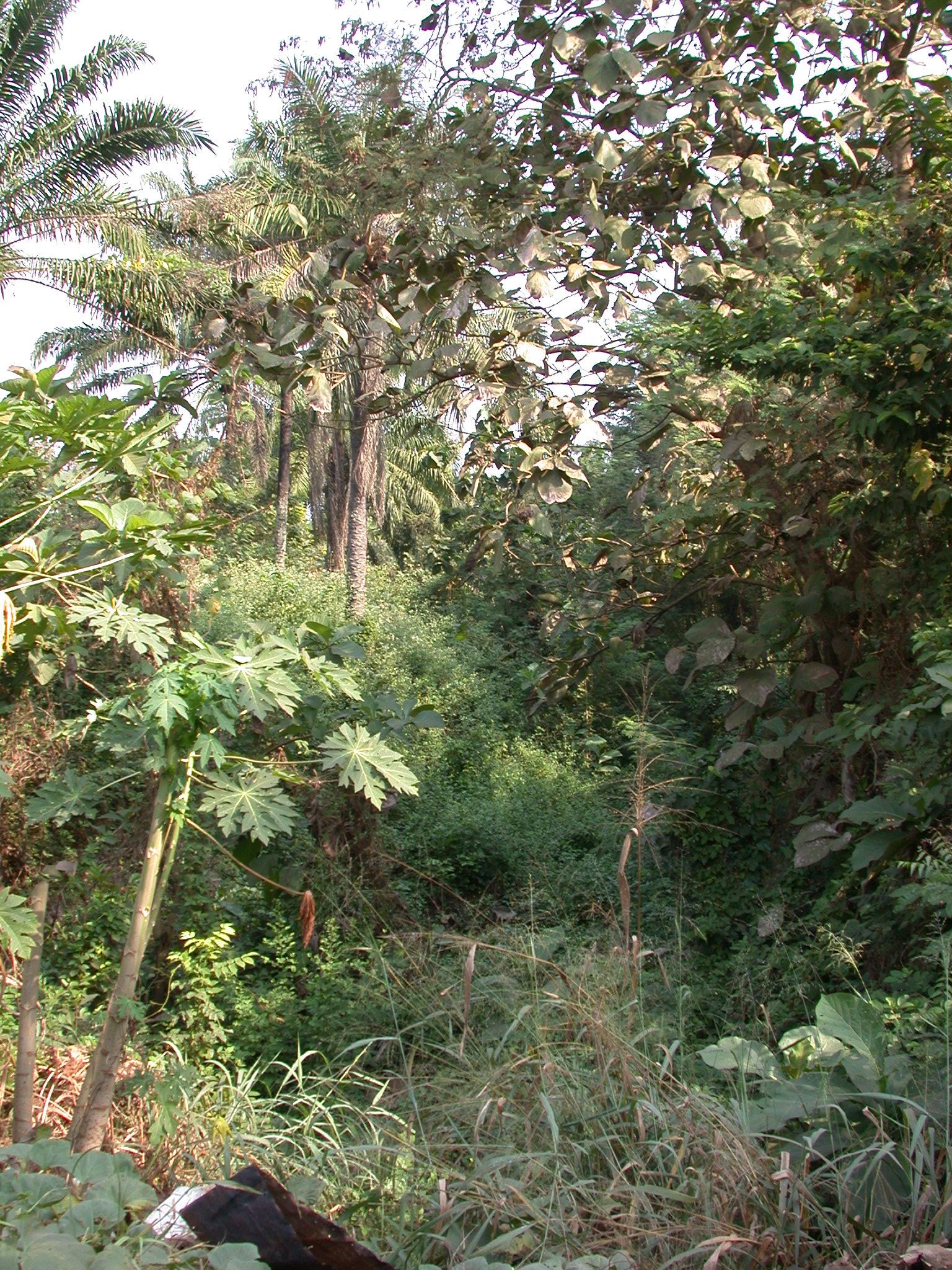 Agbodo Moat Around Abomey, Benin