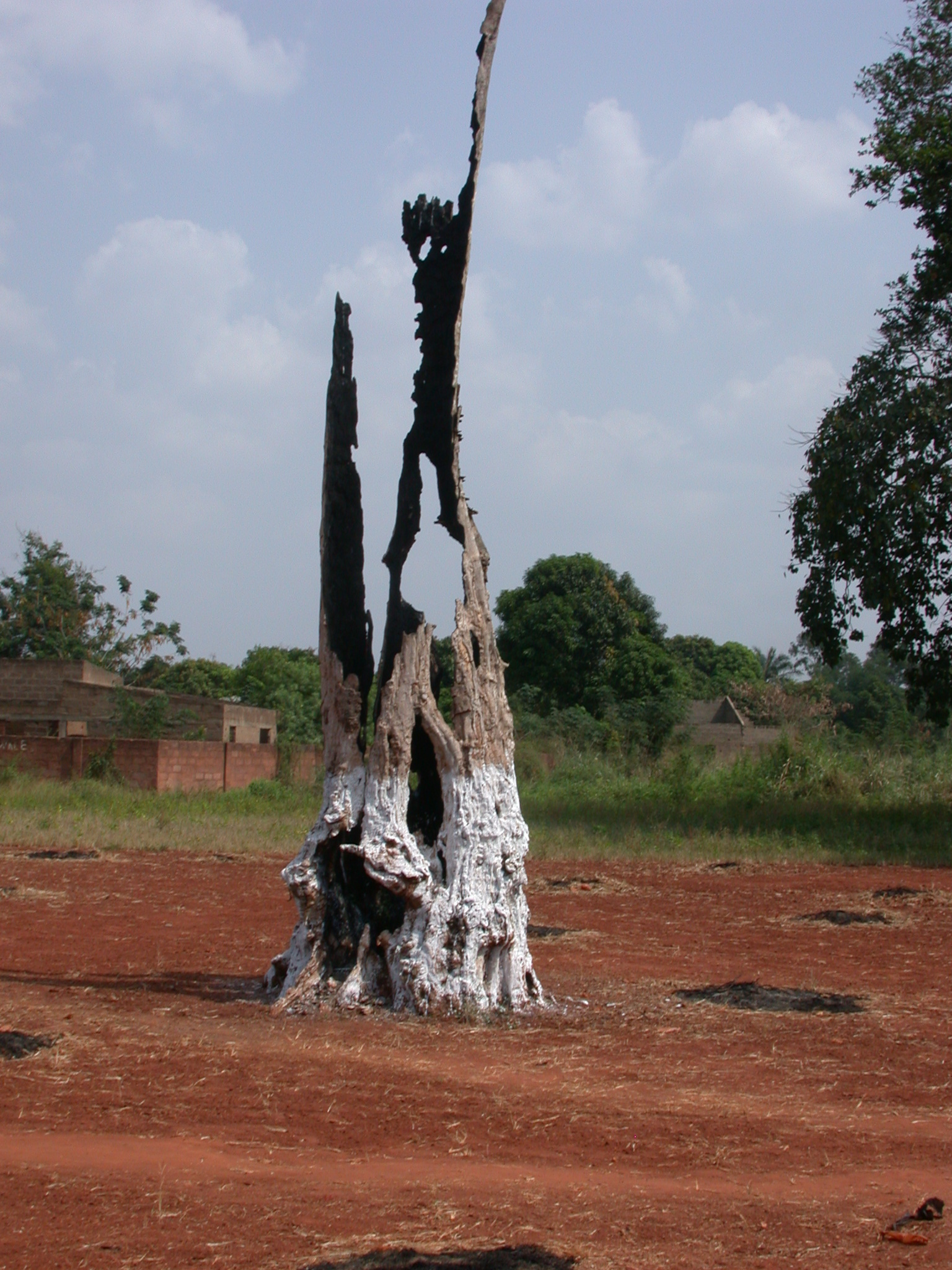 Old Burnt Tree, Palace of Crown Prince Agonglo, Abomey, Benin