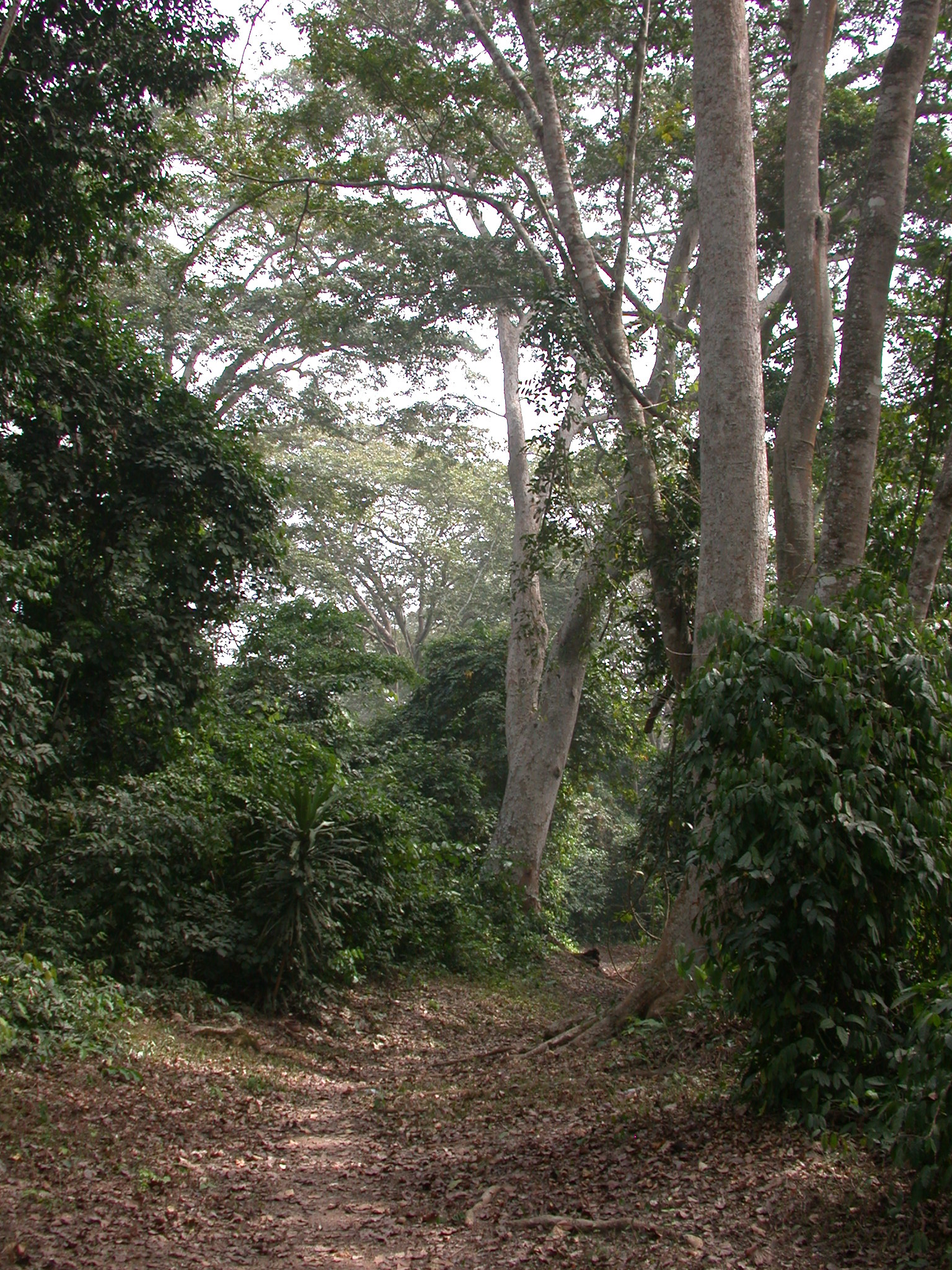 Wooded Path, Osun Sacred Grove, Oshogbo, Nigeria