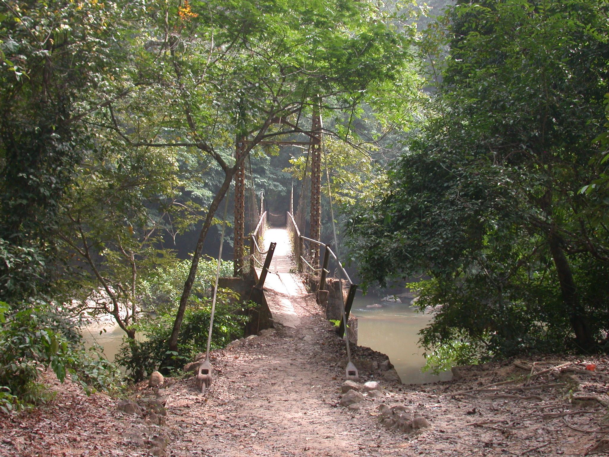 Bridge Across Osun River, Osun Sacred Grove, Oshogbo, Nigeria