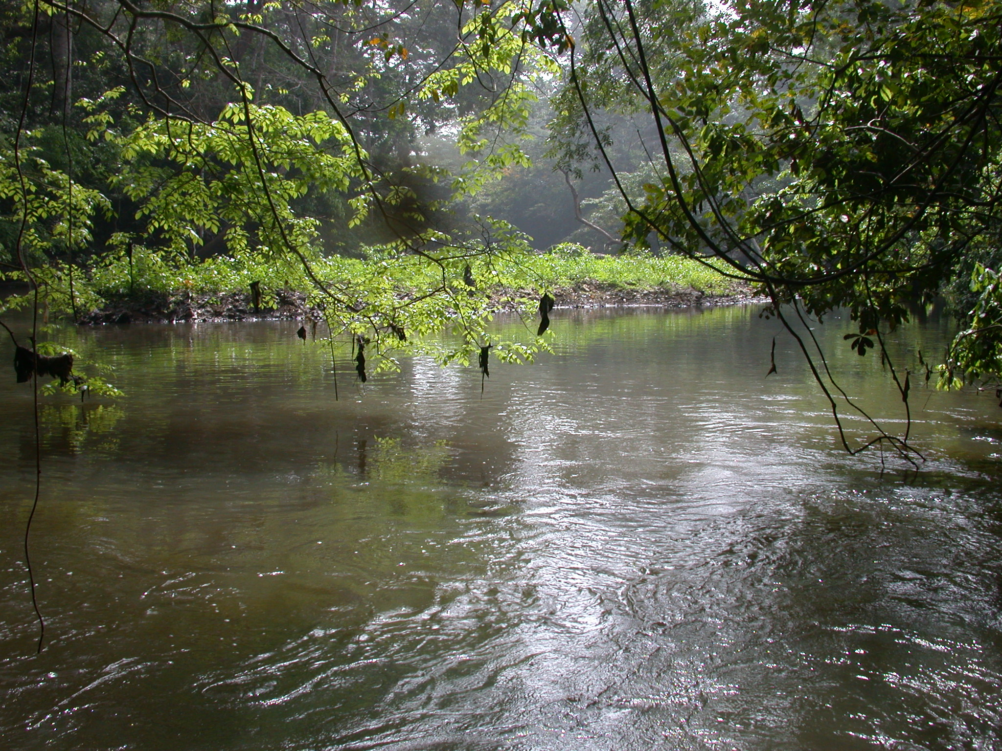 Swirling Eddies in Osun River, Osun Sacred Grove, Oshogbo, Nigeria