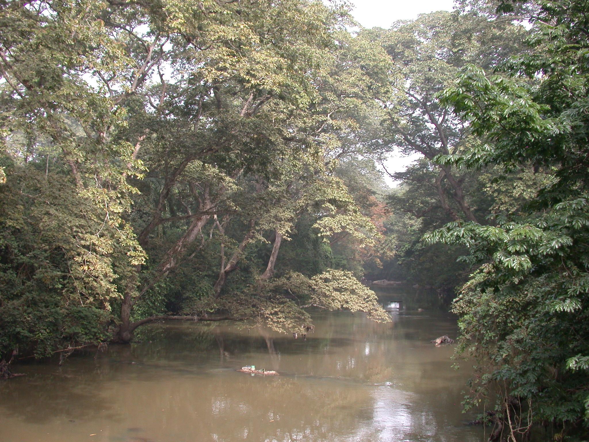 Lush Vegetation by Osun River, Osun Sacred Grove, Oshogbo, Nigeria