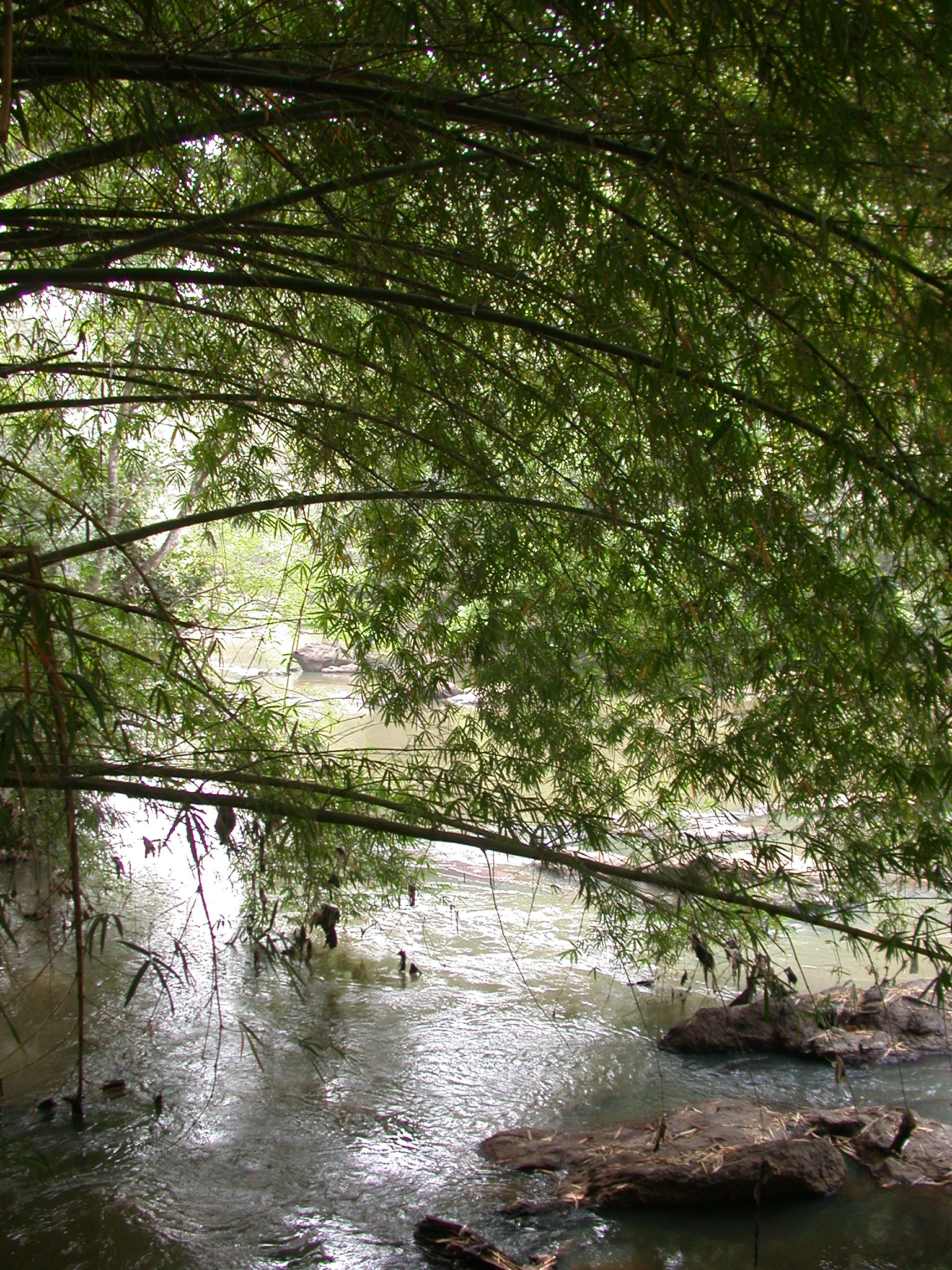 Shade Under Bamboo by Osun River, Osun Sacred Grove, Oshogbo, Nigeria