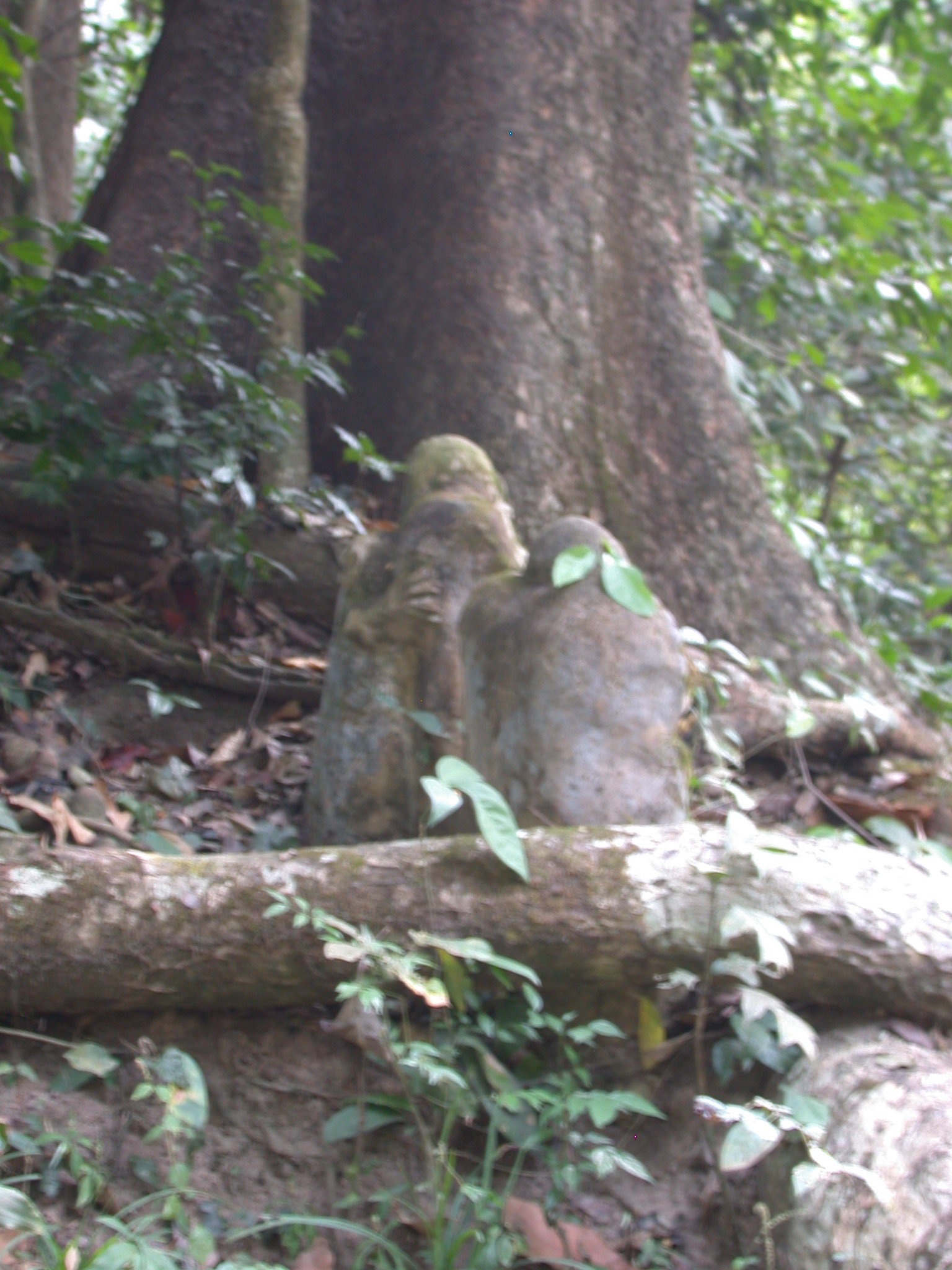 Sculpture Shrine by Osun River, Osun Sacred Grove, Oshogbo, Nigeria