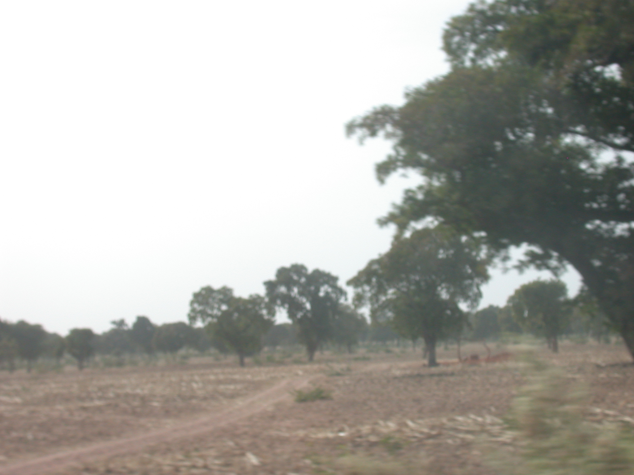 Landscape on Route From Bamako to Timbuktu, Mali