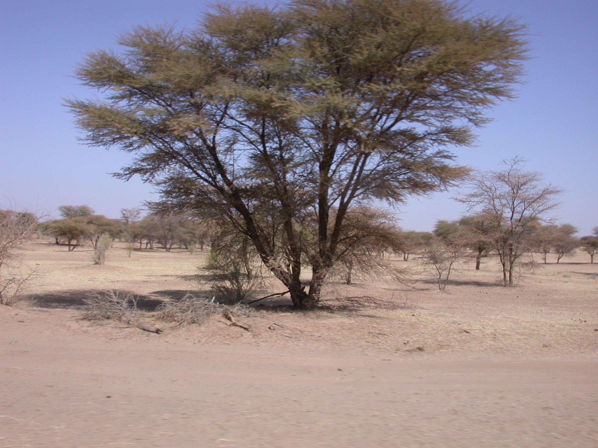 Terrain on Route From Bamako to Timbuktu, Mali