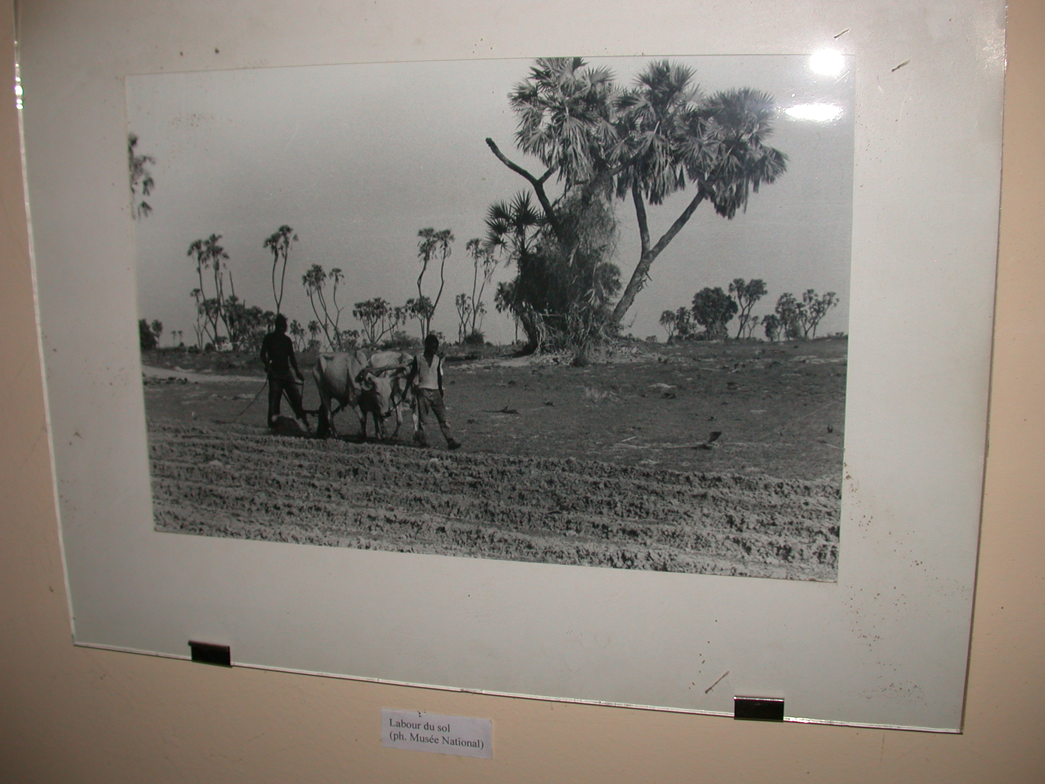 Photo of Working the Soil, Timbuktu Ethnological Museum, Timbuktu, Mali