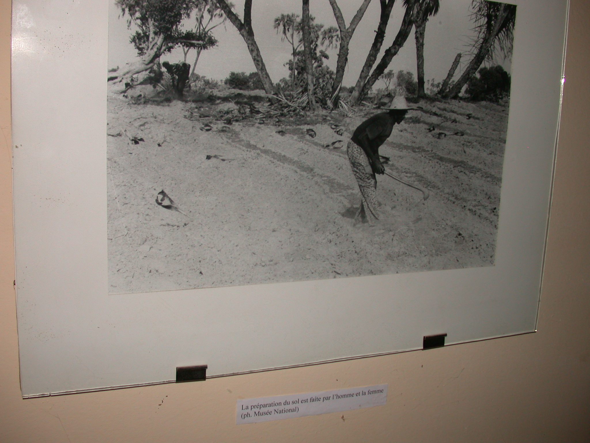 Photo Labeled Men and Women Prepare the Soil, Timbuktu Ethnological Museum, Timbuktu, Mali